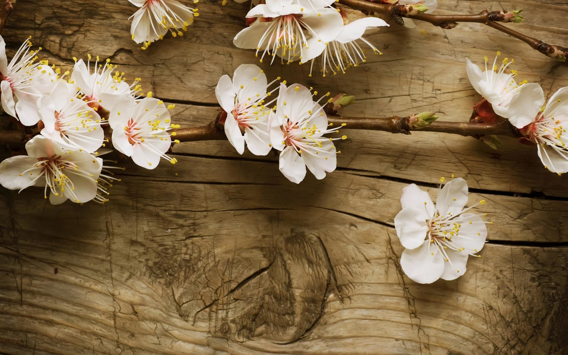 Spring wallpapers hd 85 background pictures 1920x1200 early spring wallpapers hd top hd images for free mightylinksfo