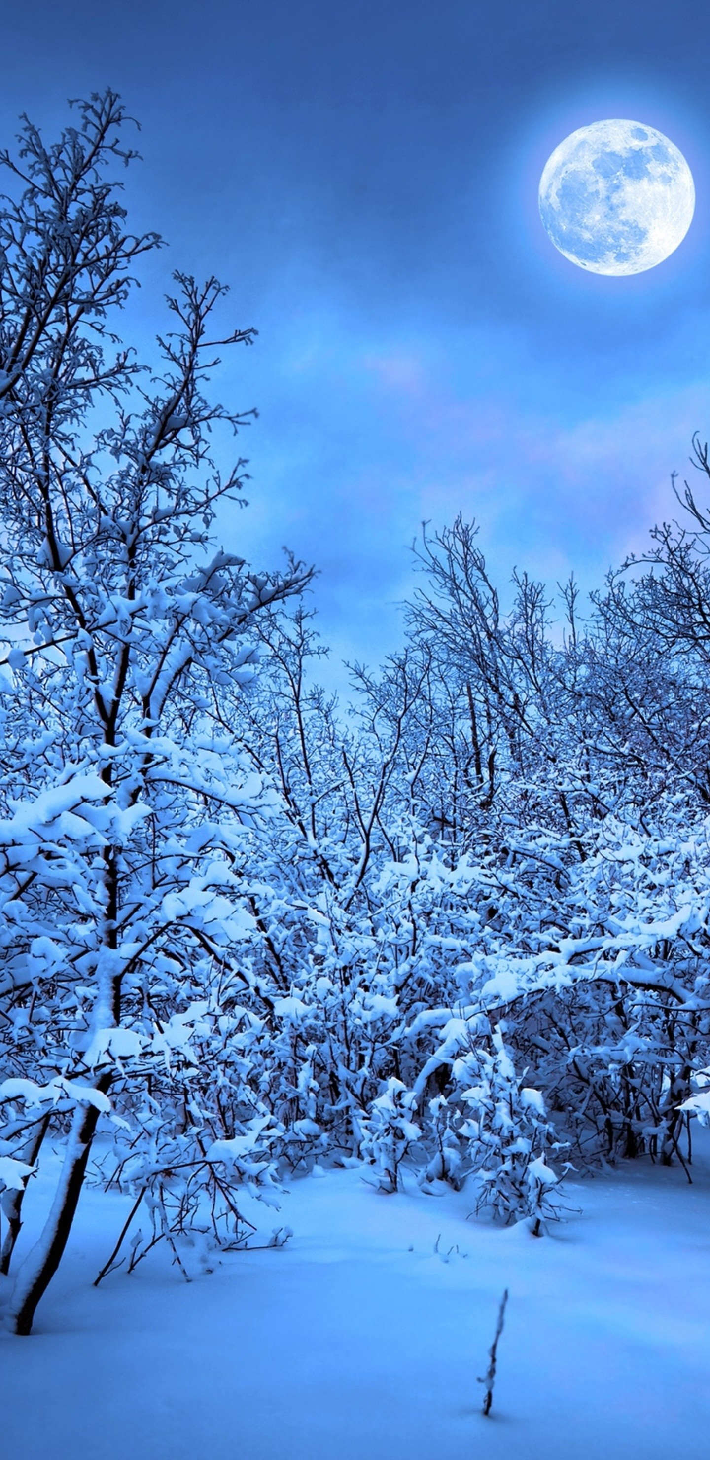 Snow winter wallpapers 68 background pictures - Nature wallpaper note 8 ...