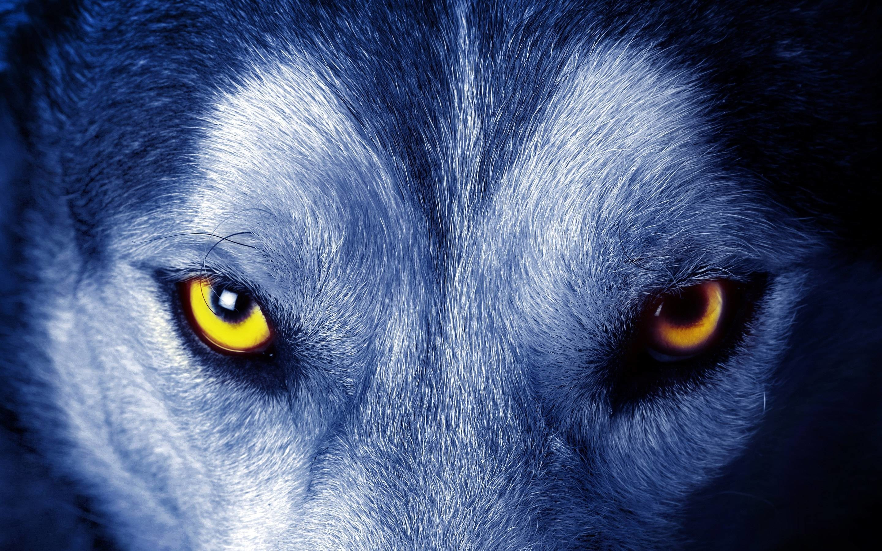 1920x1200 Animals Wallpaper Howling Wolf Iphone Wallpapers HD Resolution