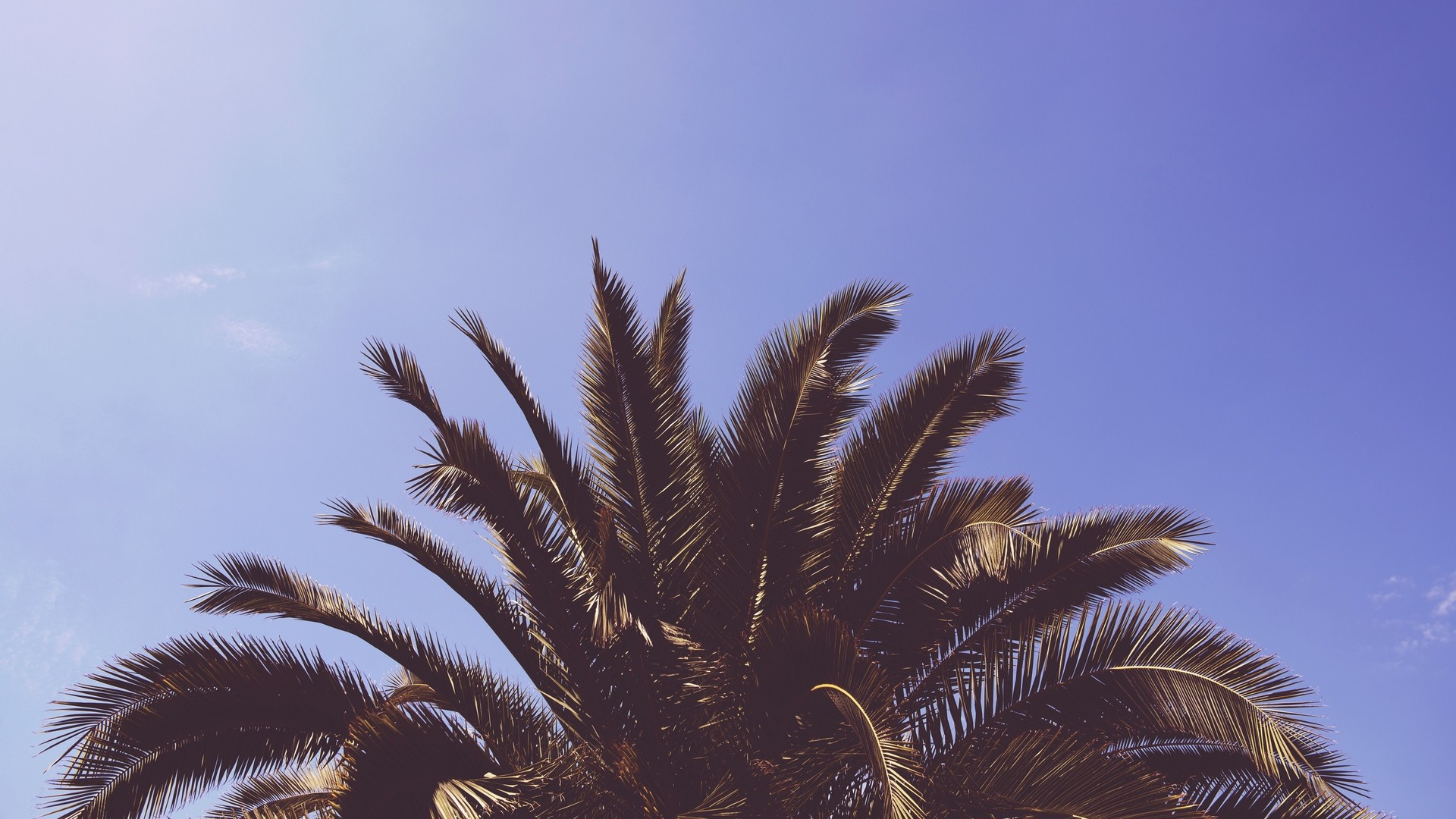 palm tree desktop wallpapers 73 background pictures