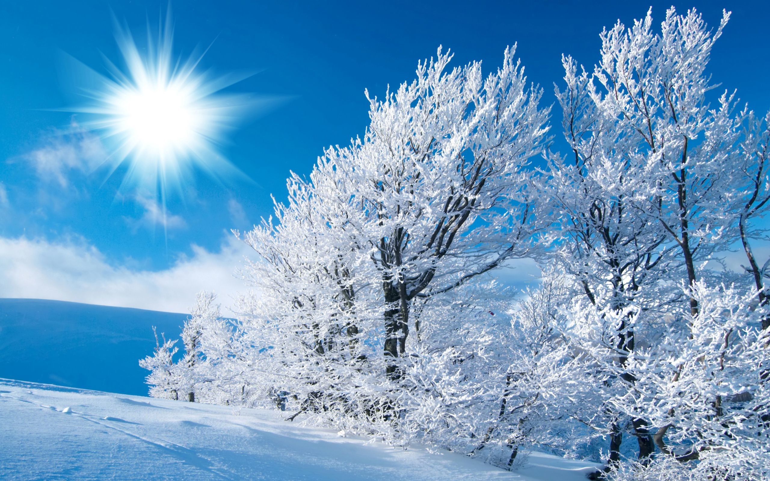 Winter Scene Wallpapers (52+ Background Pictures