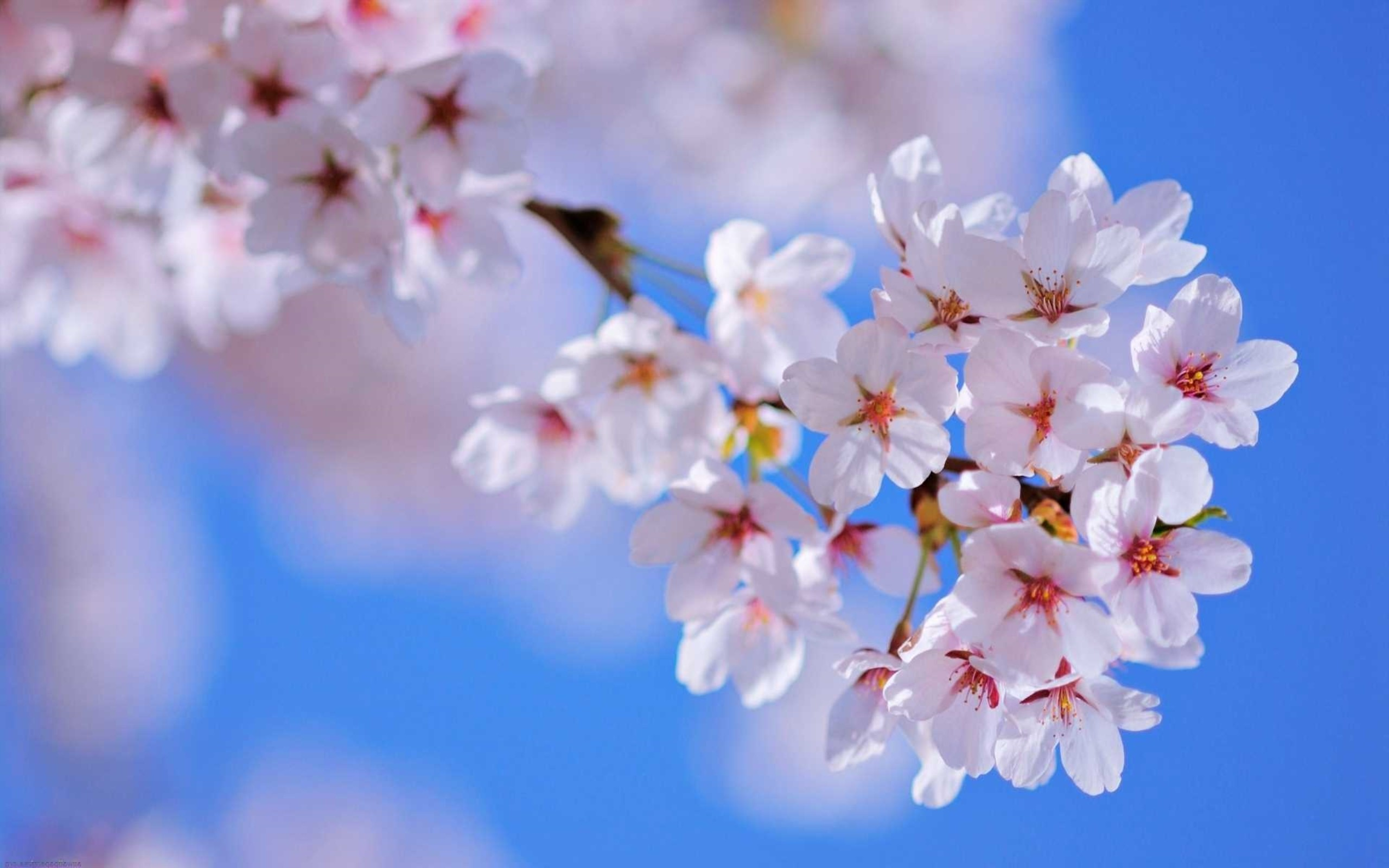 Flowers Wallpapers 75 Background Pictures