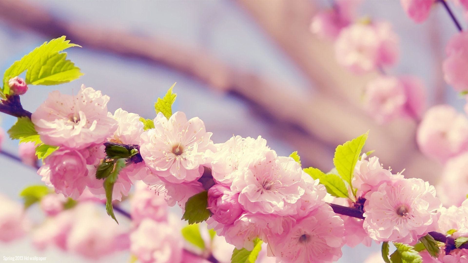 Spring flowers wallpapers 82 background pictures 3456x2160 spring flowers wallpaper high definition is 4k wallpaper mightylinksfo