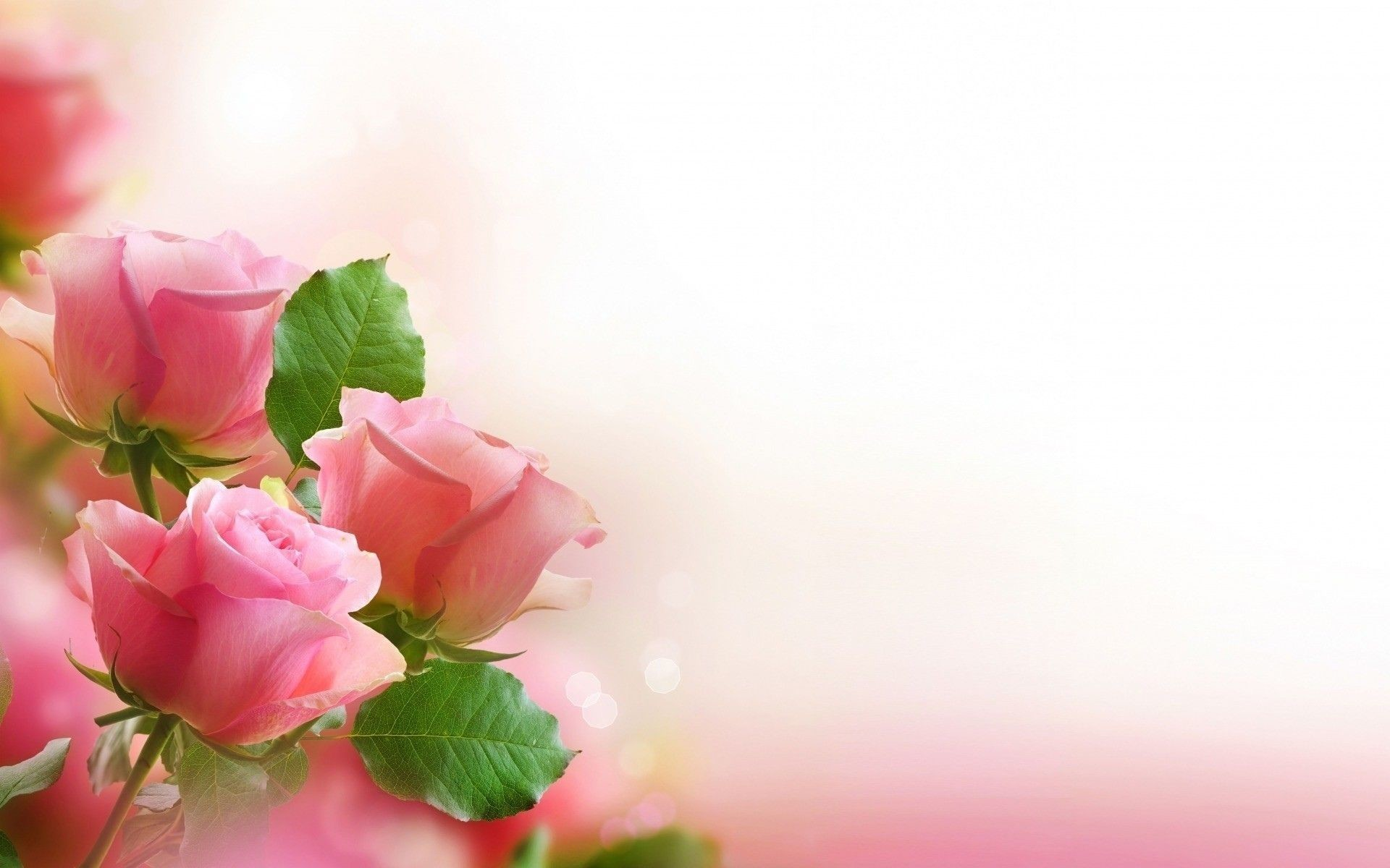 Love flowers amp romantic wallpapers best collection arresting