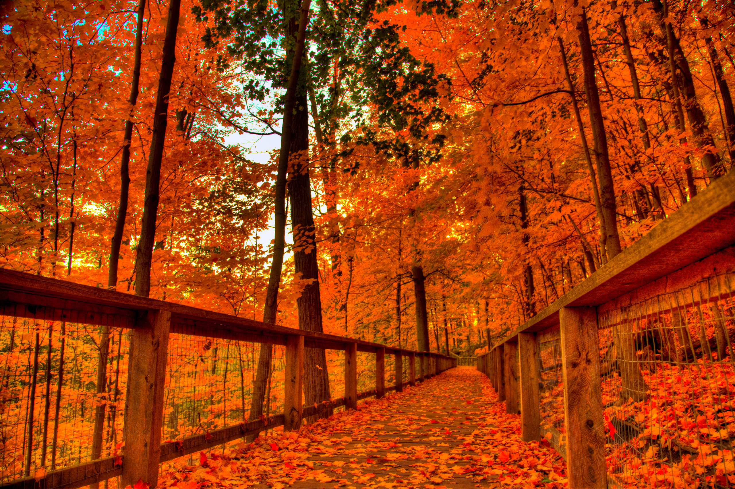 autumn wallpapers widescreen (71+ background pictures)