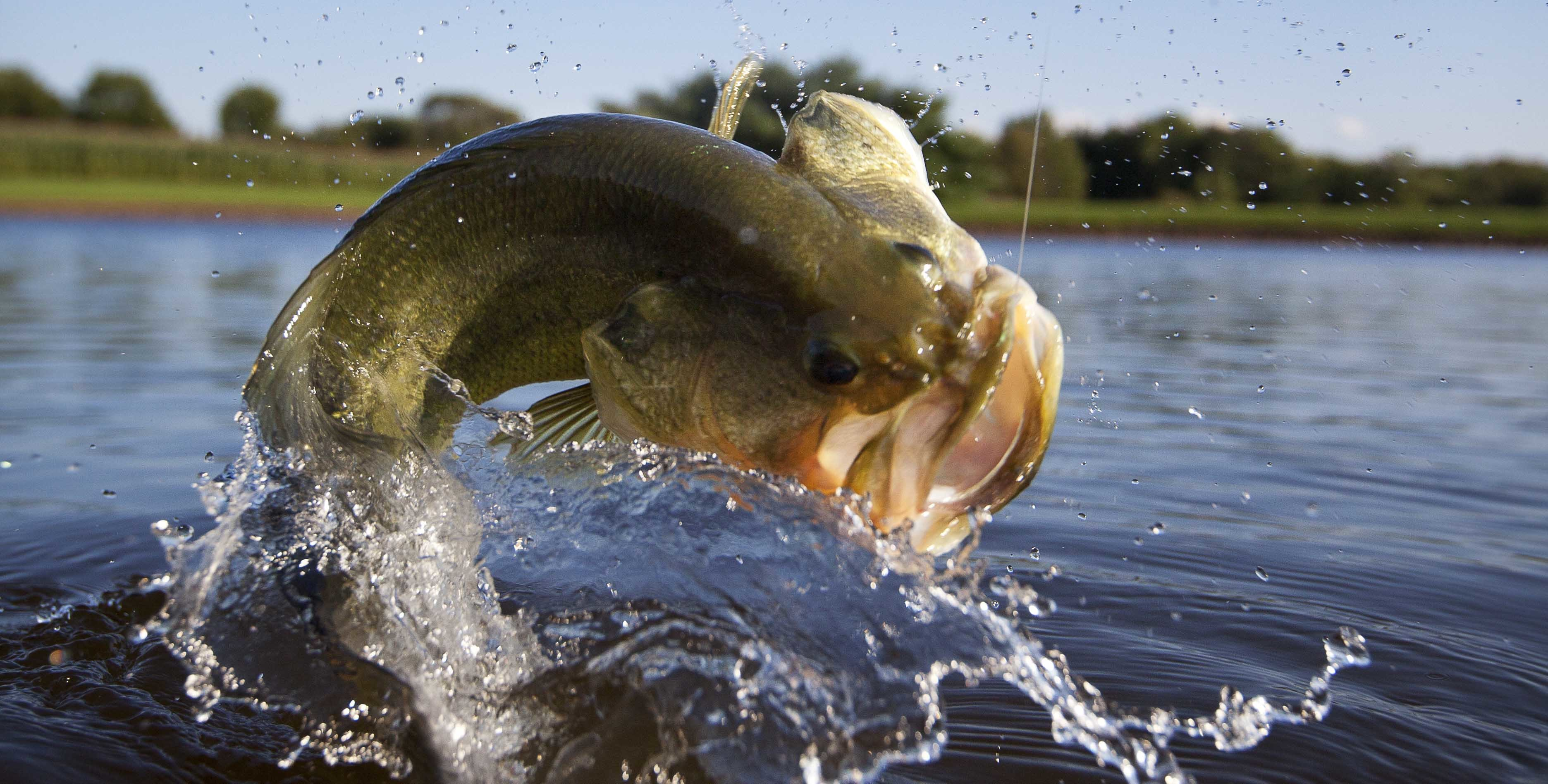 Largemouth Bass Wallpapers 59 Background Pictures