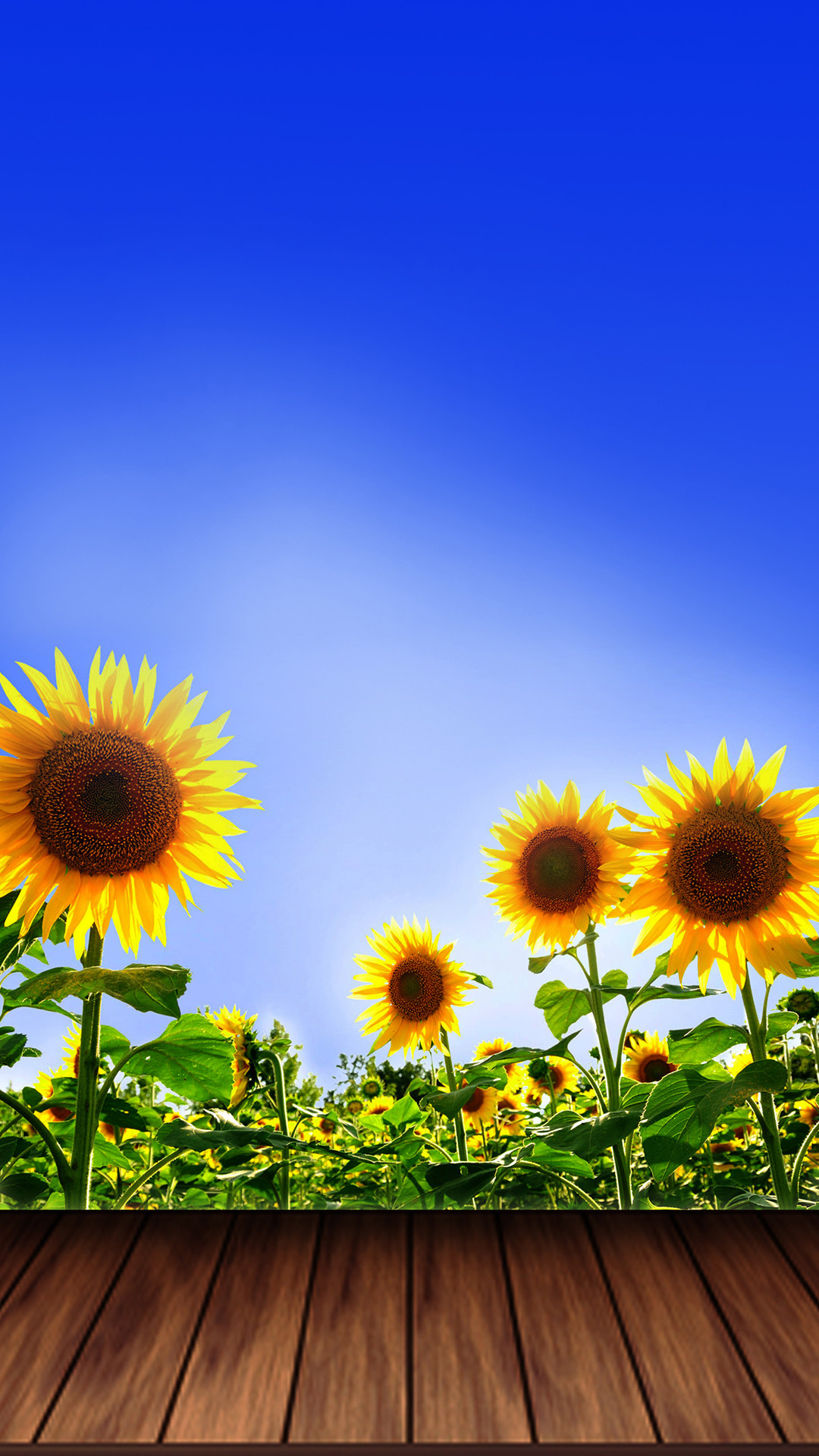Sunflower Wallpapers (74+ background pictures)