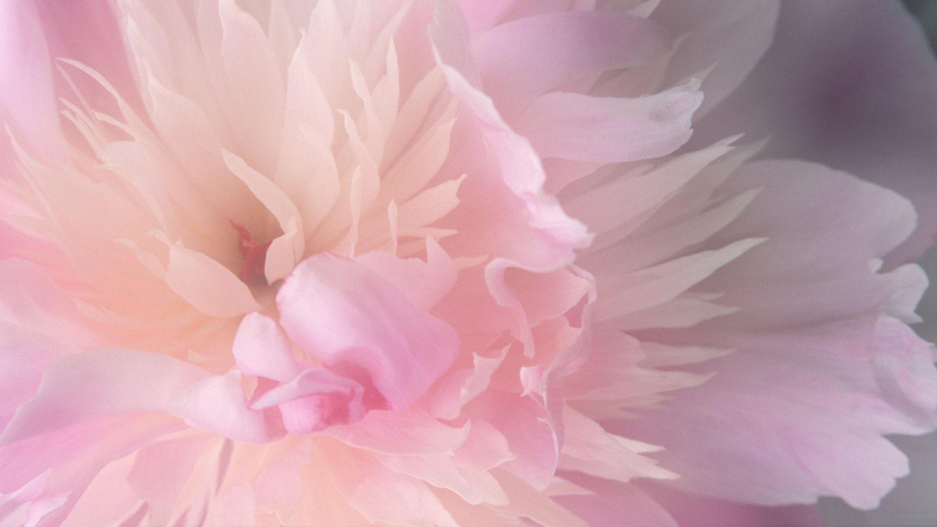 Pink Mac Wallpapers 70 Background Pictures