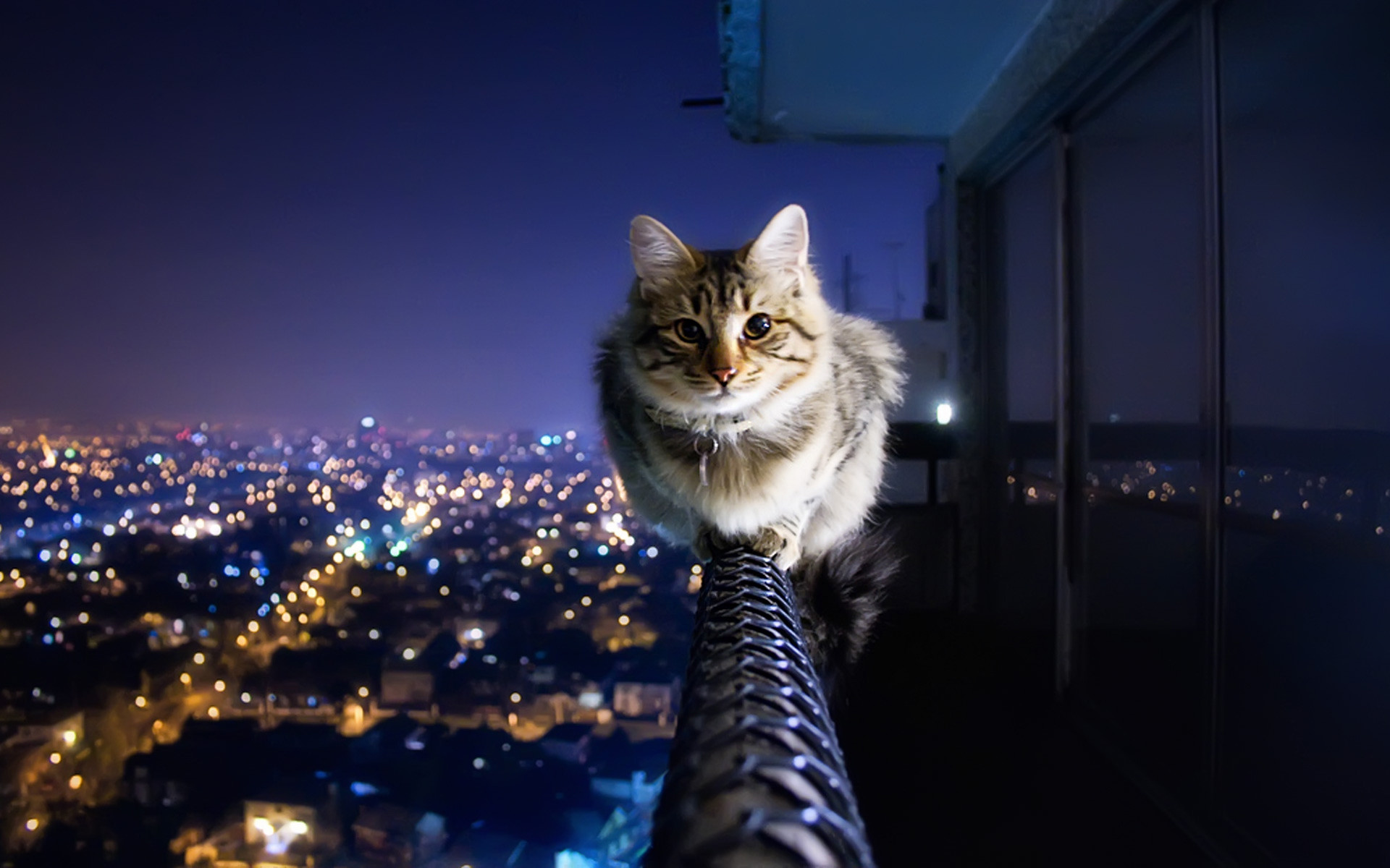 Funny Cats Wallpapers 72 Background Pictures