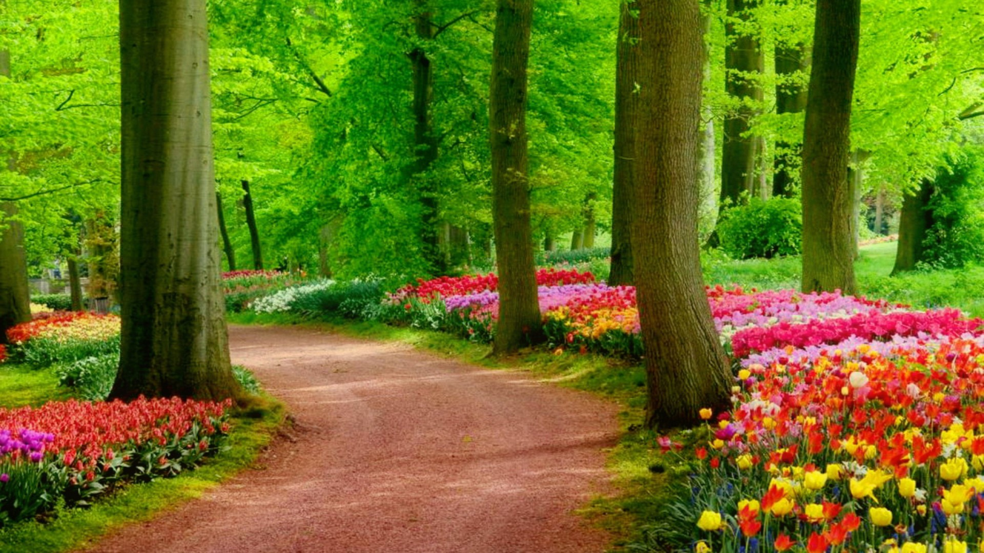 Hd Nature Wallpapers 1080p Zip File Download ✓ The Best HD