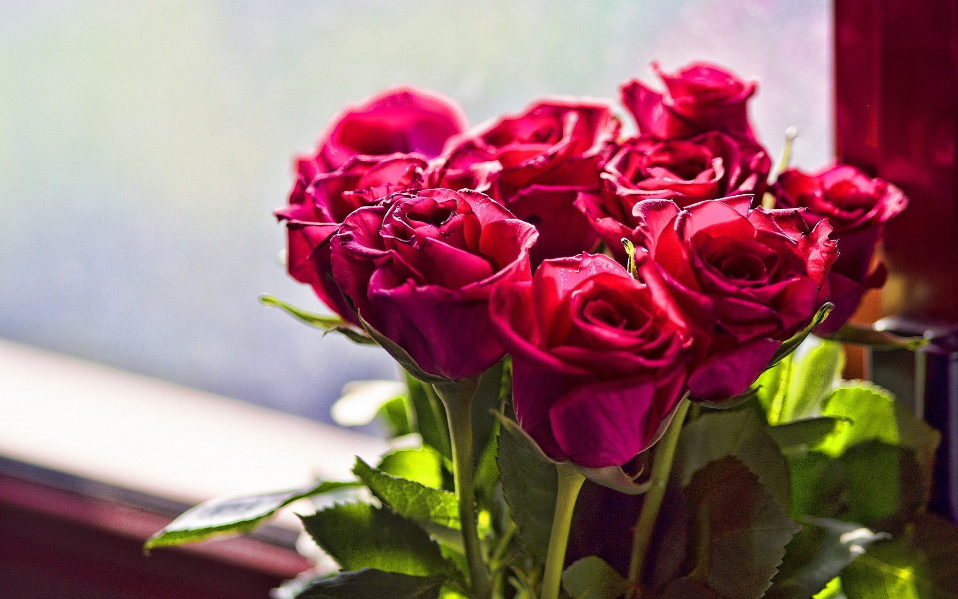 Rose Flower Wallpapers HD (65+ background pictures)