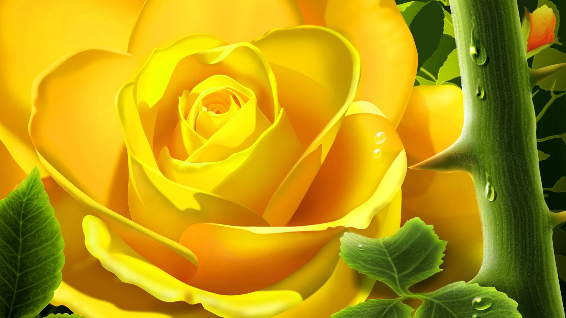 Yellow Flowers Wallpapers 59 Background Pictures