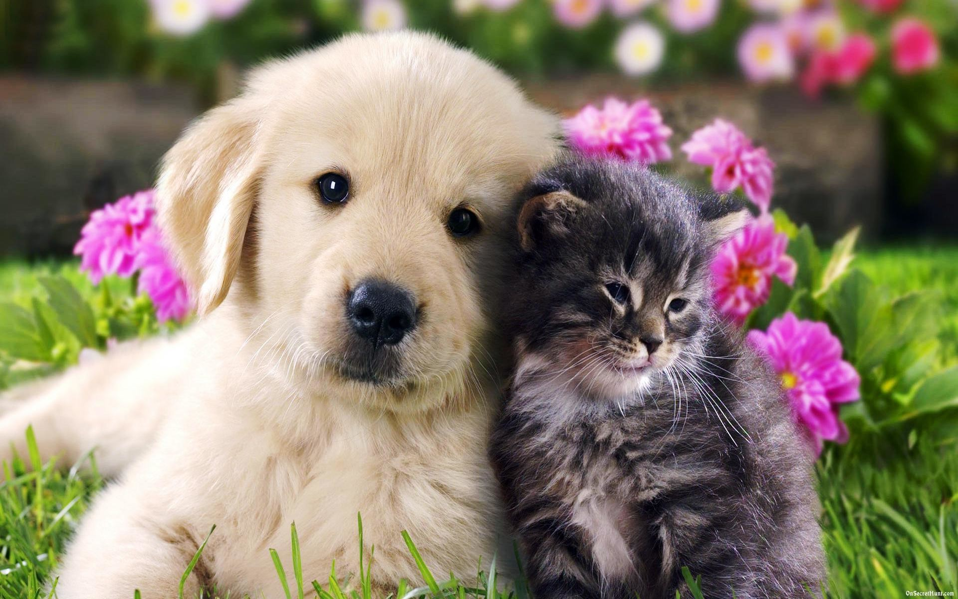 Cat And Dog Wallpapers 63 Background Pictures