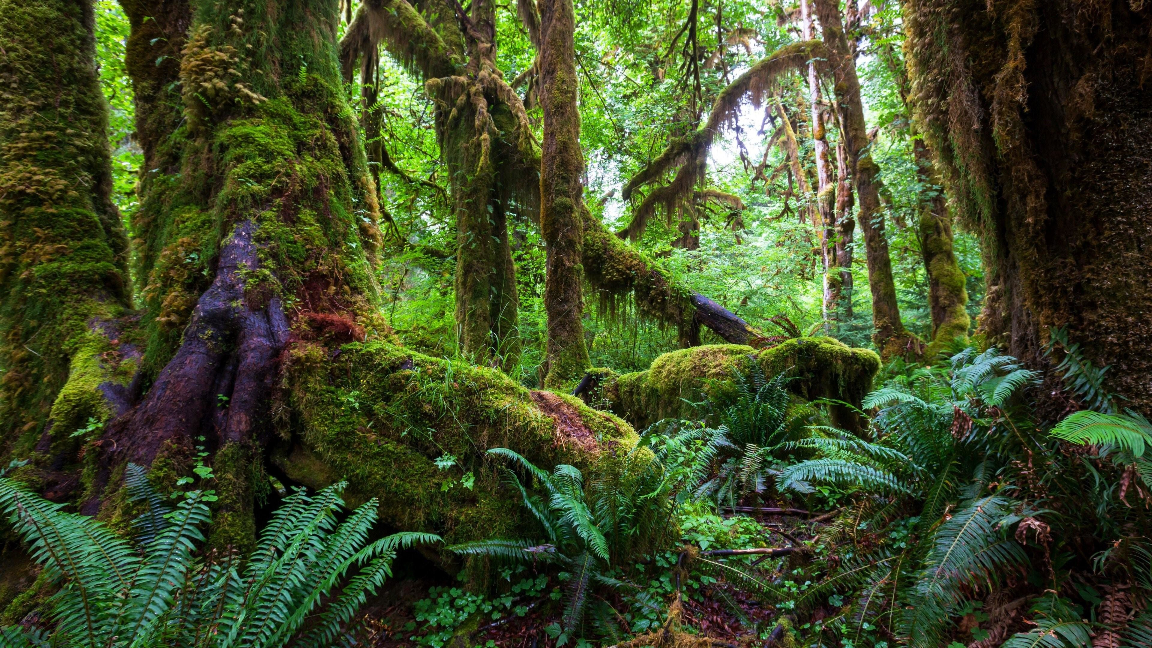 Tropical Rainforest Wallpapers 66 Background Pictures