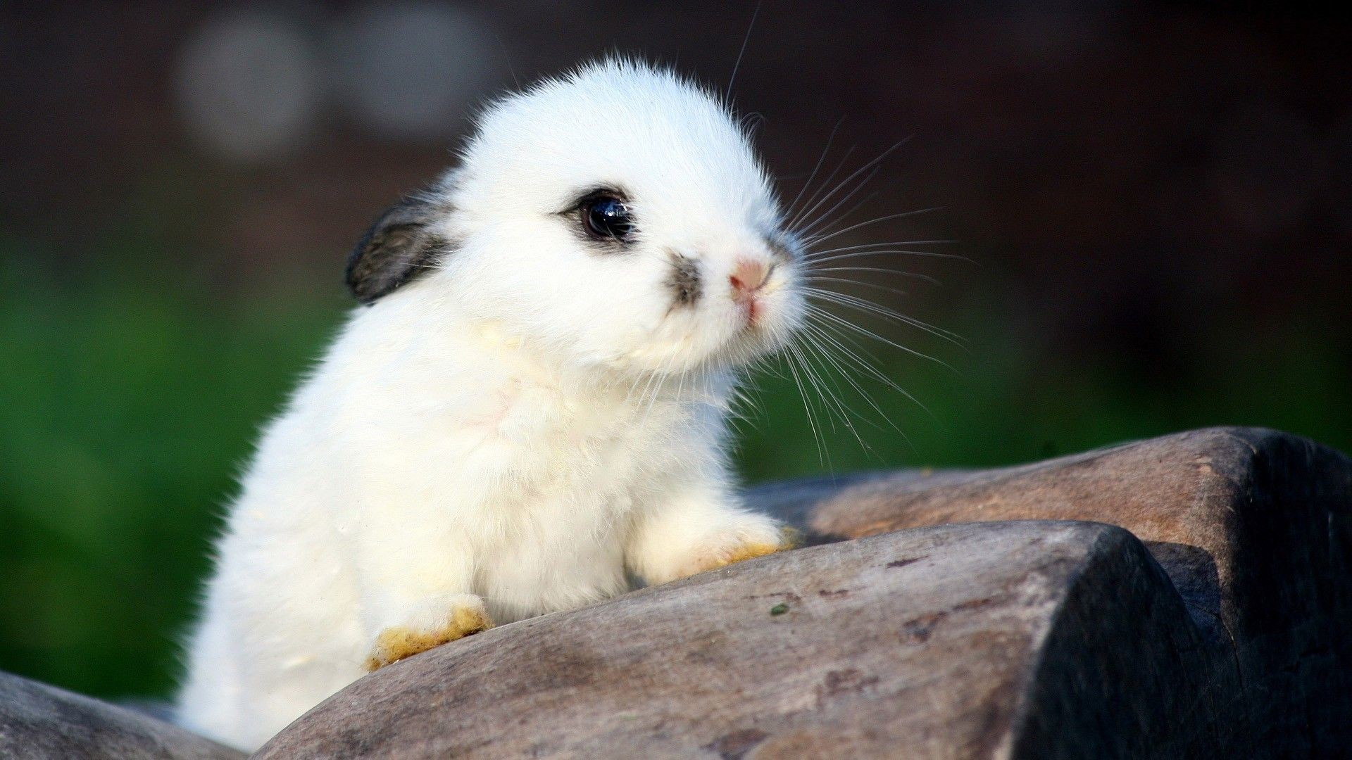 Cute Baby Animal Wallpapers 72 Background Pictures
