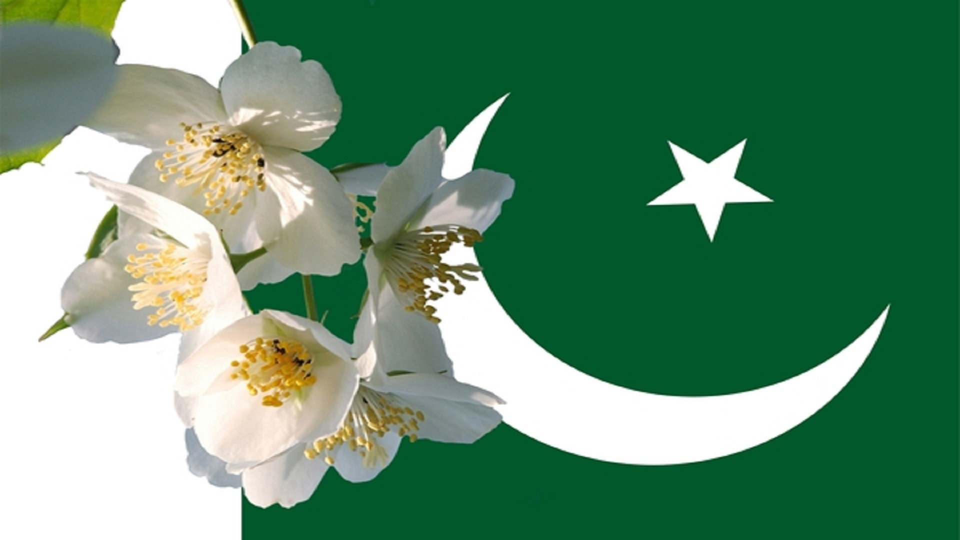 Pakistan flag wallpapers hd 2018 57 background pictures 1920x1080 white flowers with pakistani flag free wallpapers hd mightylinksfo