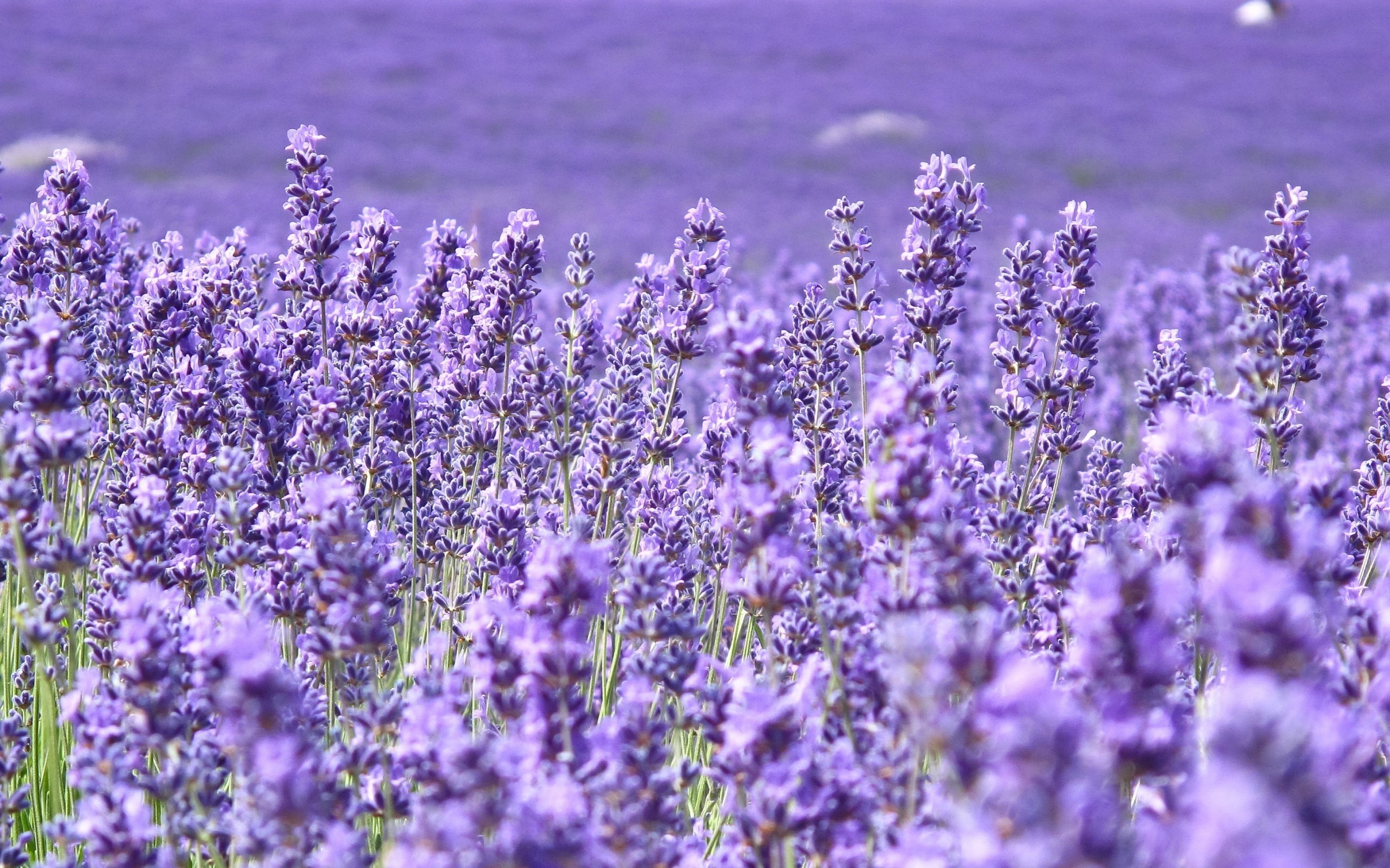 Purple Flower Wallpapers 82 Background Pictures