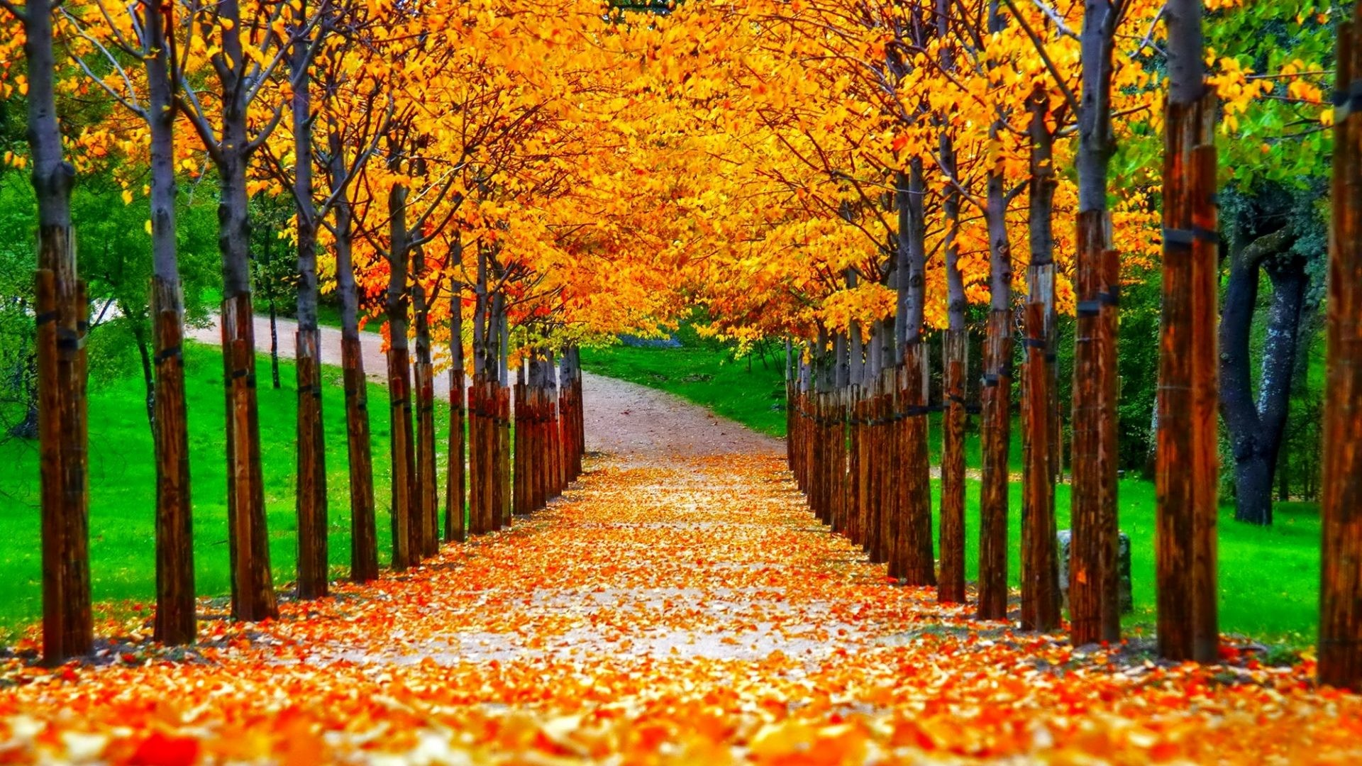 Beautiful Autumn Wallpapers (66+ background pictures)