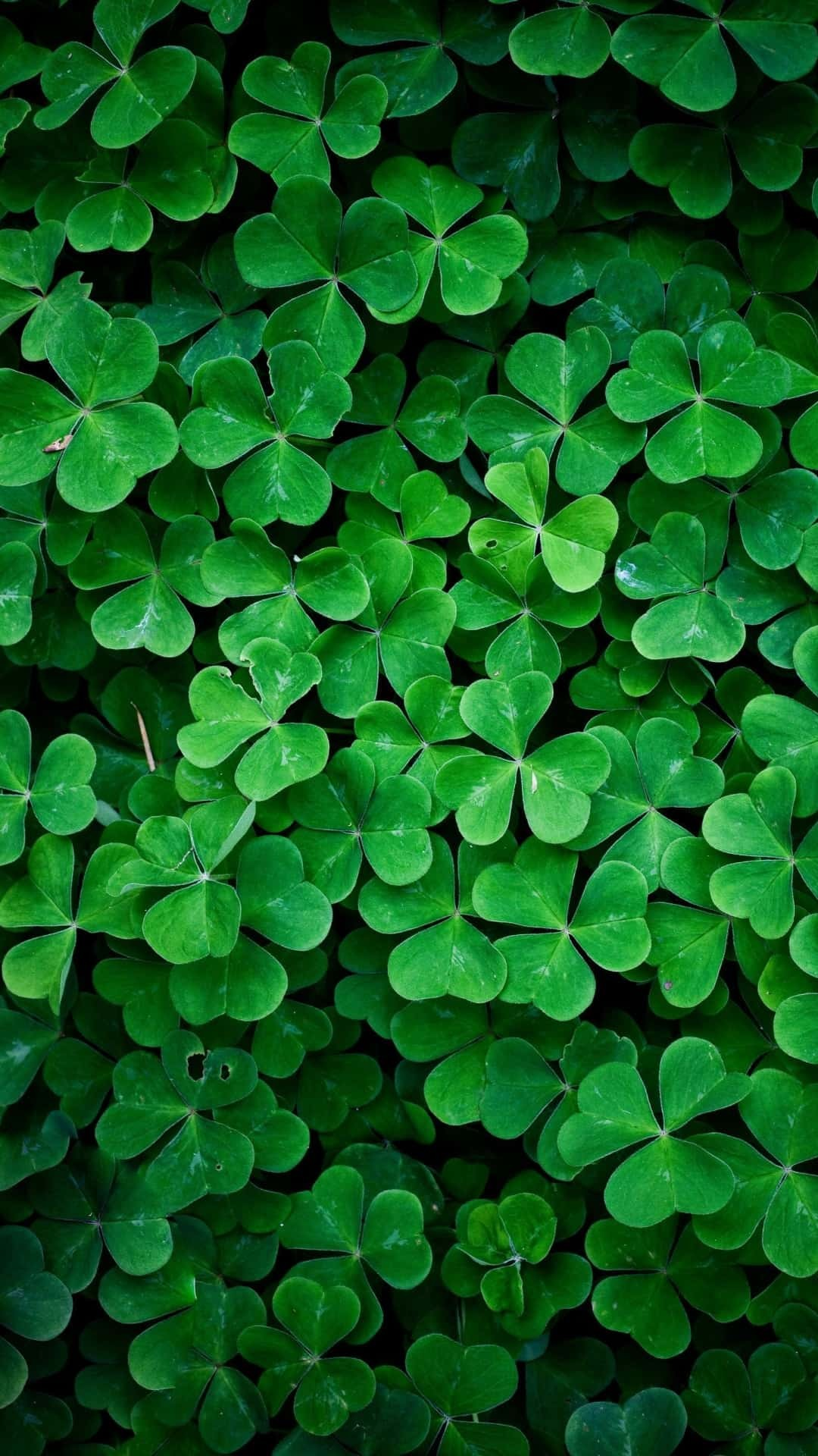Irish Wallpapers 65 Background Pictures