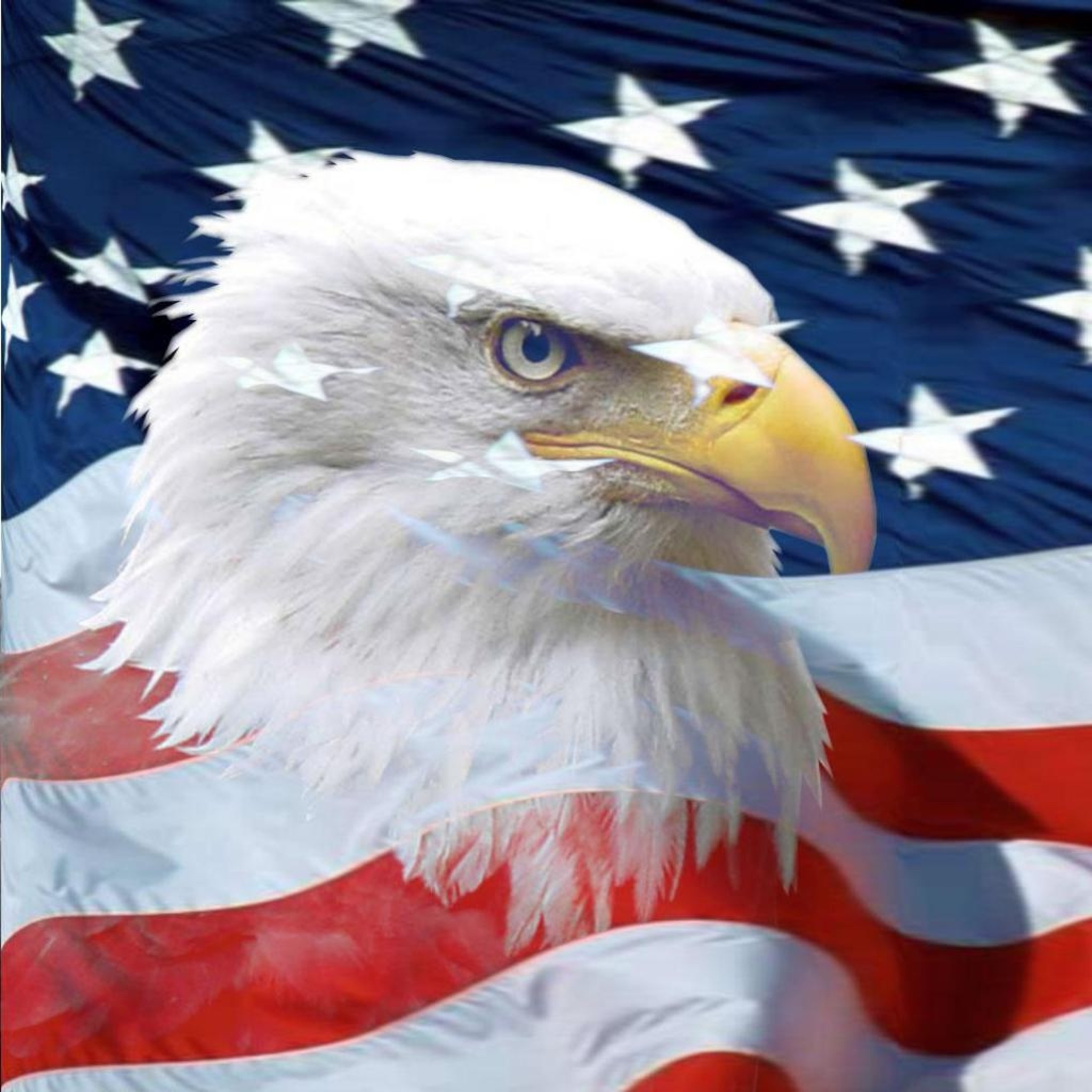 American Bald Eagle Wallpapers 62 Background Pictures