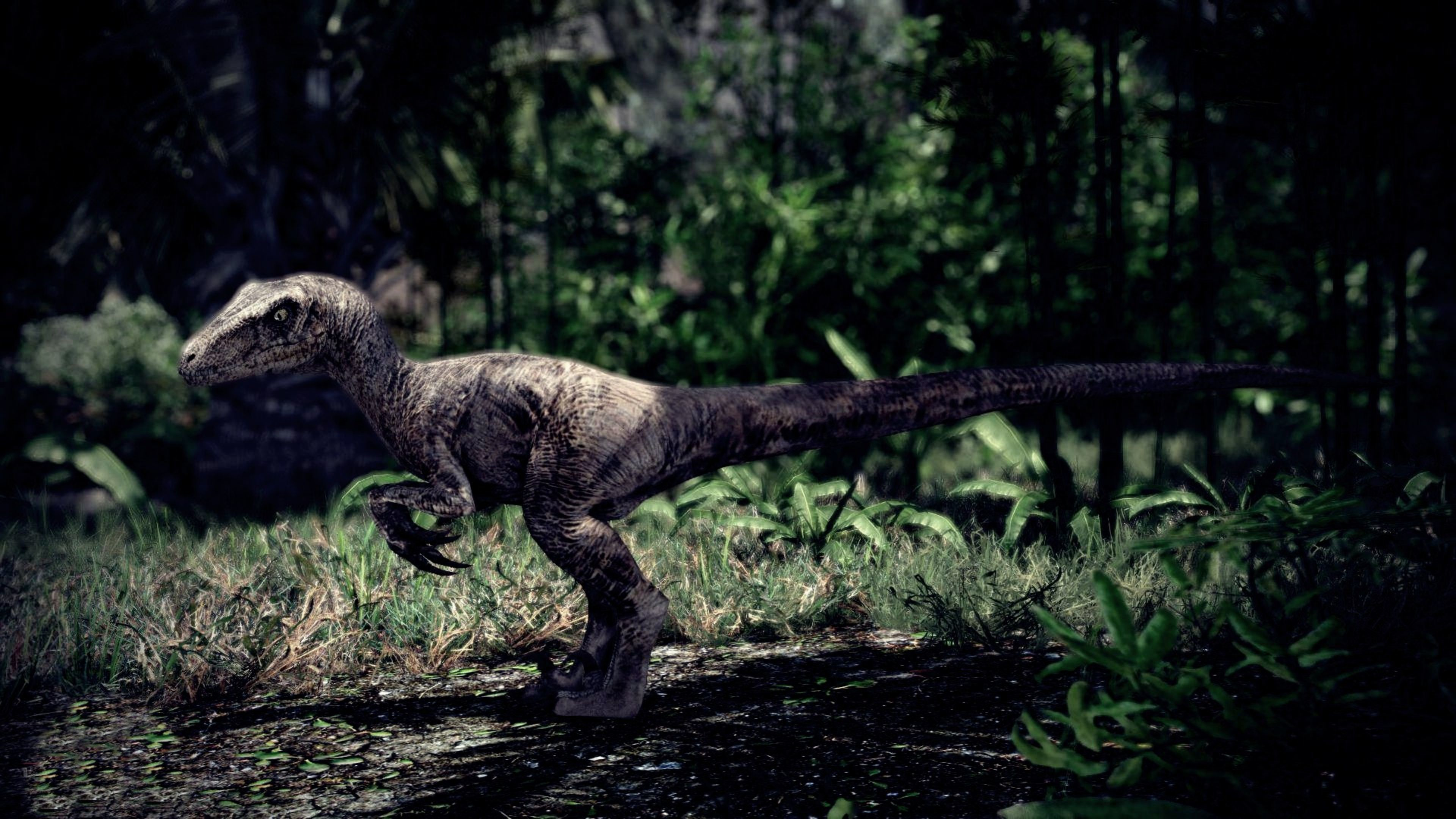 Velociraptor Wallpapers 72 Background Pictures