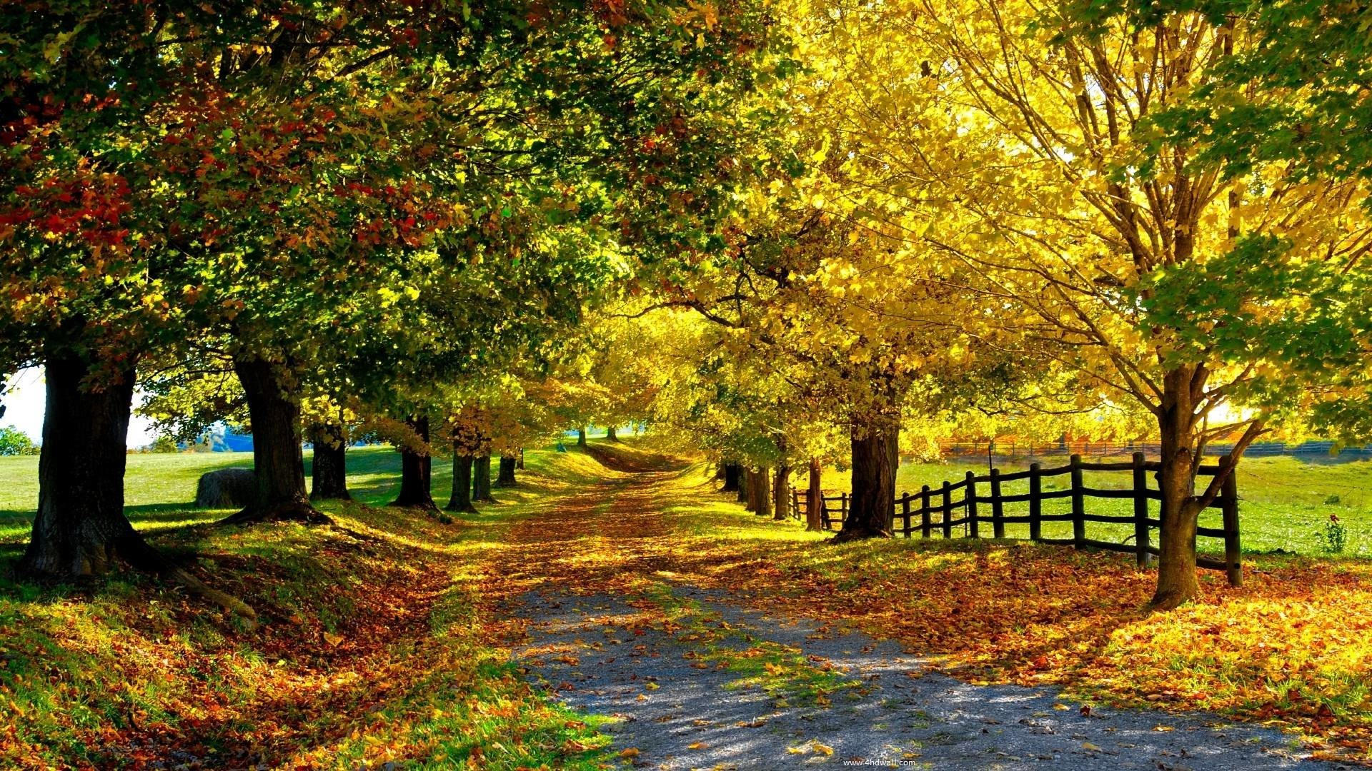 fall season wallpapers 65 background pictures