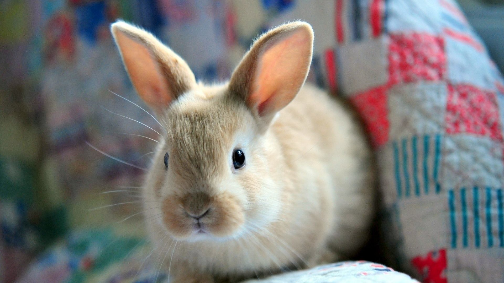 Cute Animal Wallpapers (65+ background pictures)