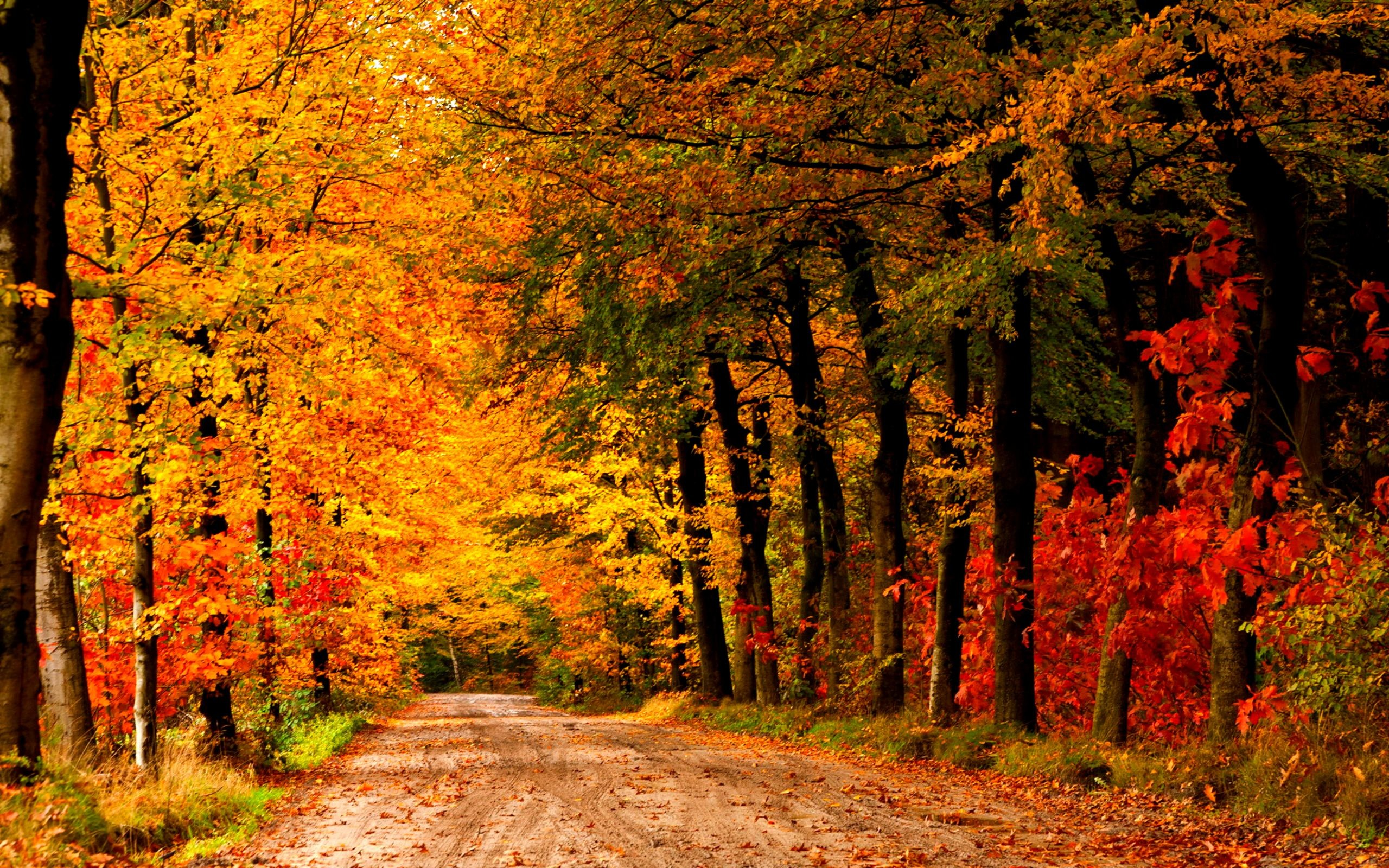 Autumn Scenes Wallpapers 63 Background Pictures