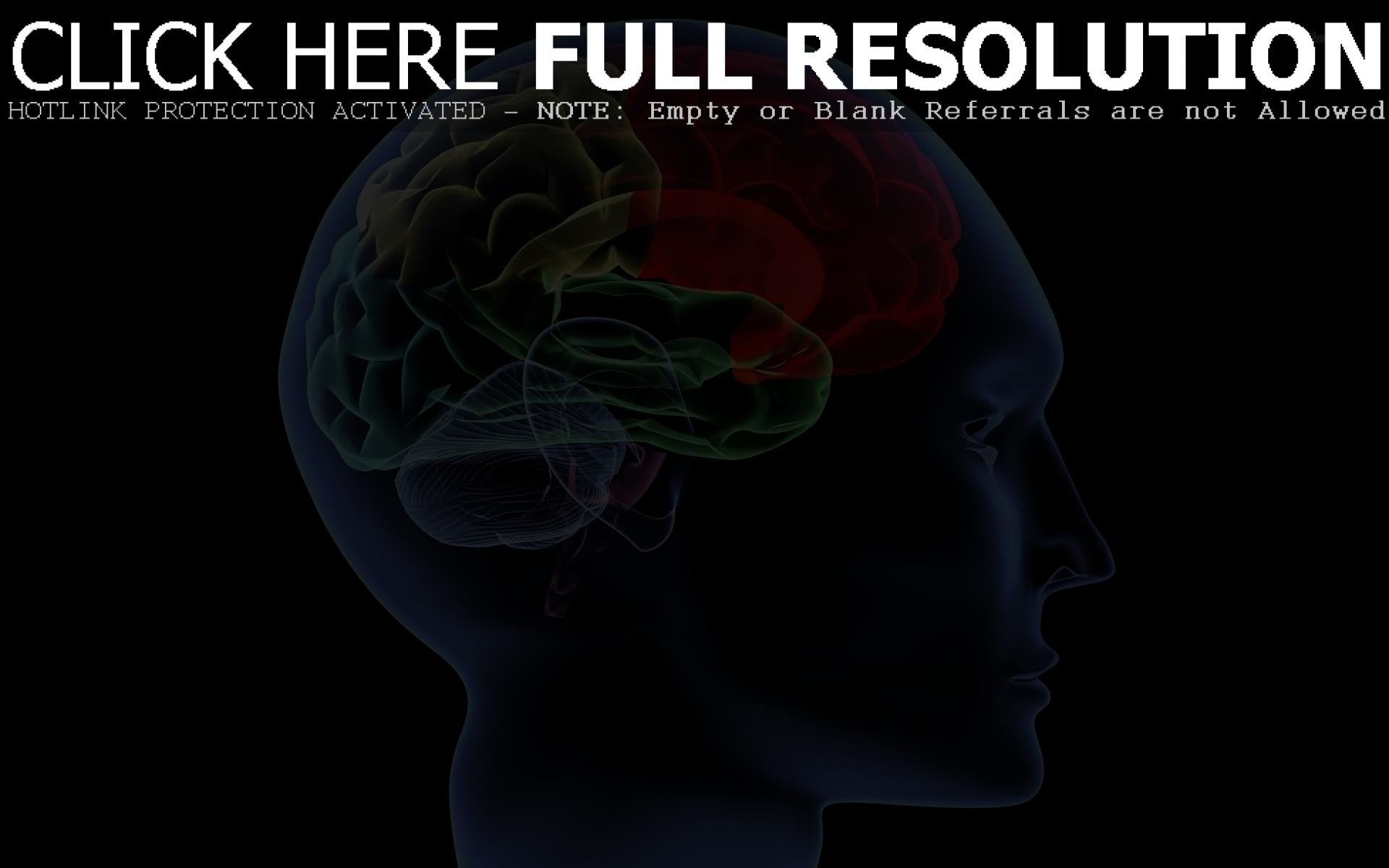 Brain Anatomy Wallpapers (62+ background pictures)