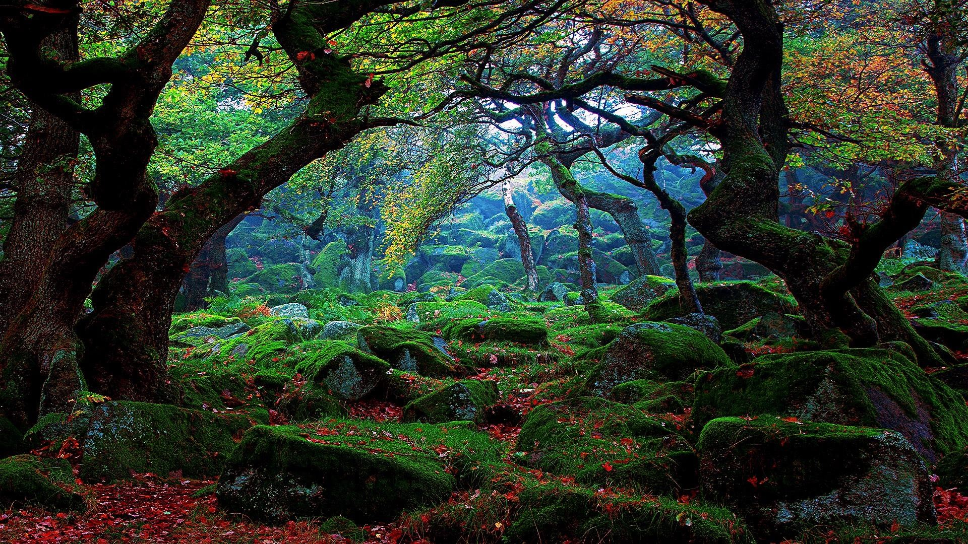 Forest Wallpapers 71 Background Pictures