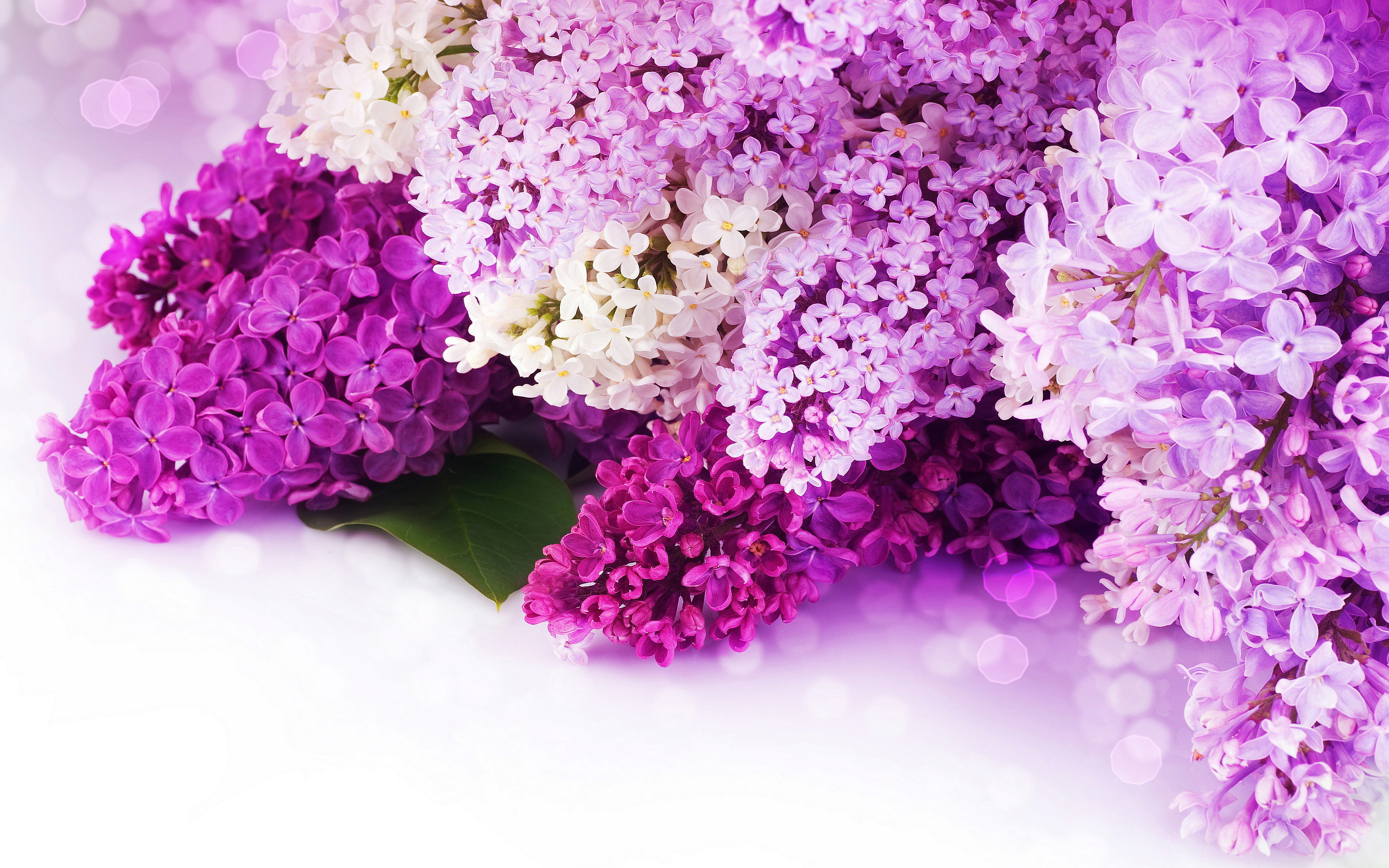 Purple Flowers Wallpapers 78 Background Pictures