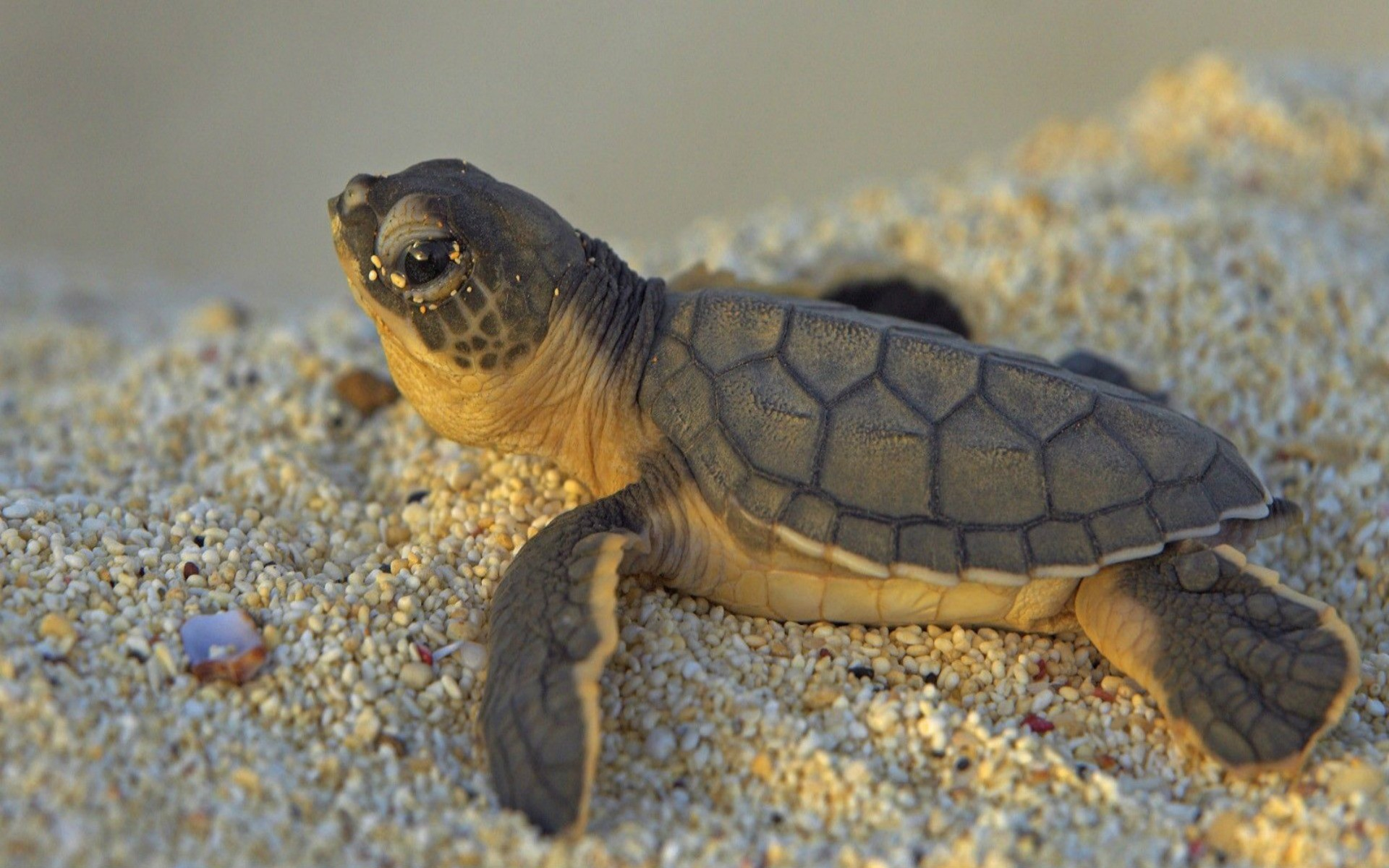 cute turtle wallpapers 62 background pictures