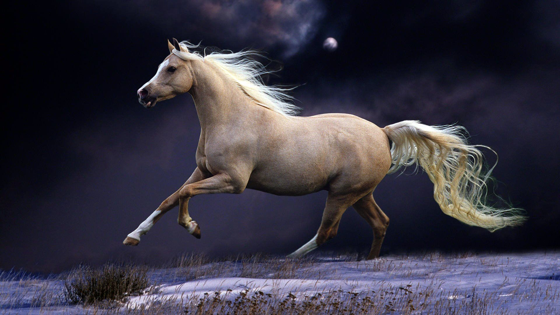 Arabian Horse Wallpapers 56 Background Pictures
