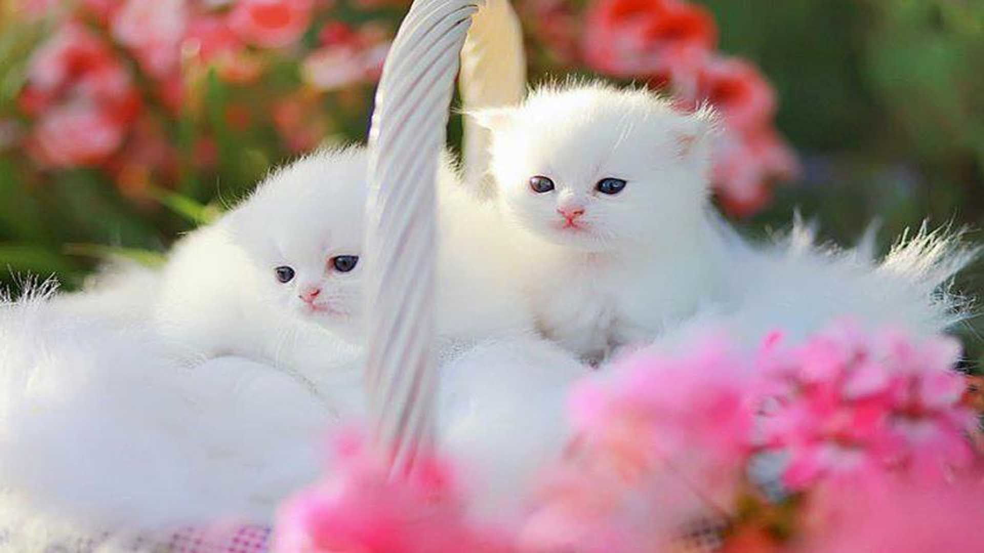 Funny kittens wallpapers 68 background pictures - Kitten backgrounds ...