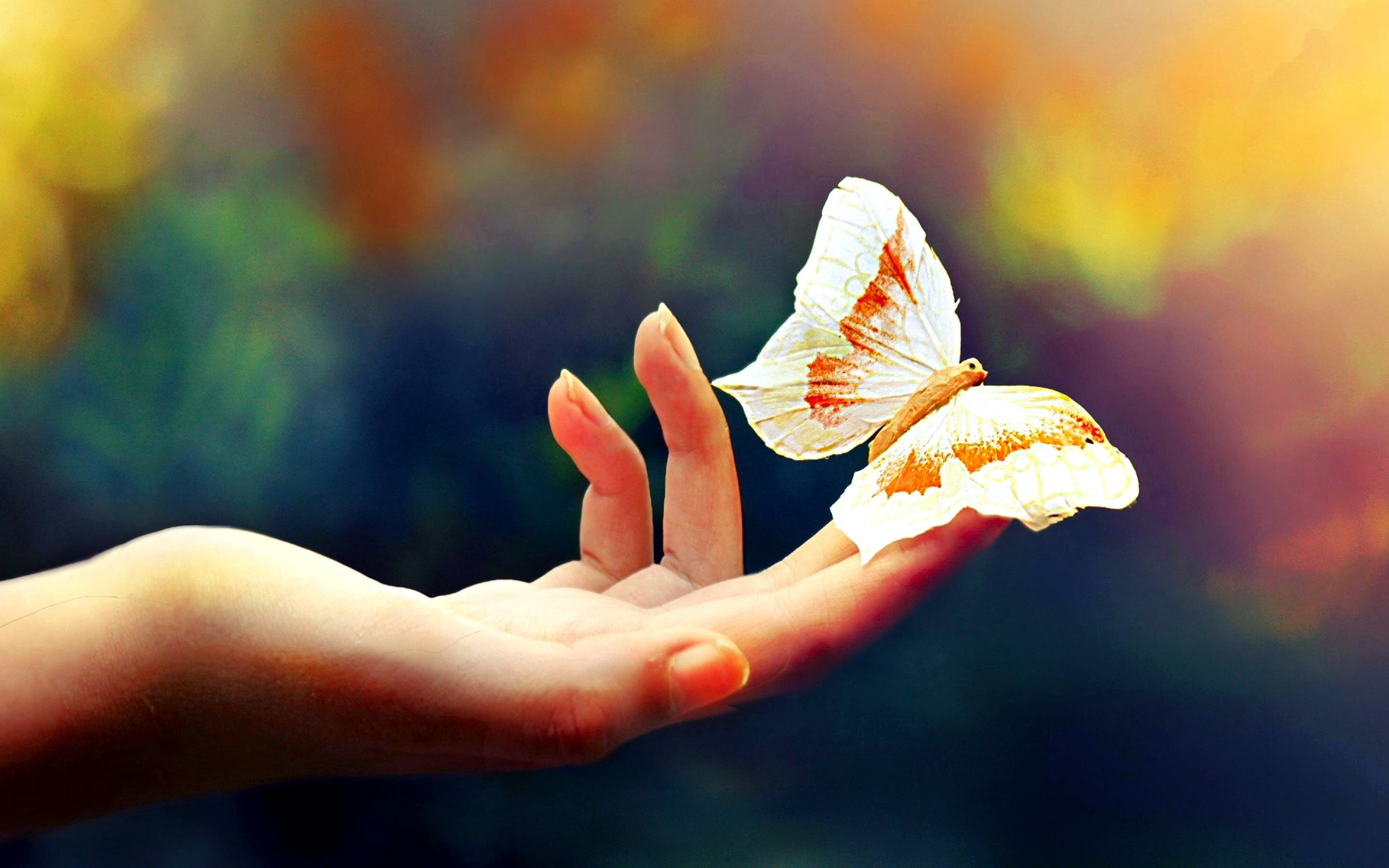 Butterfly Wallpapers 74 Background Pictures