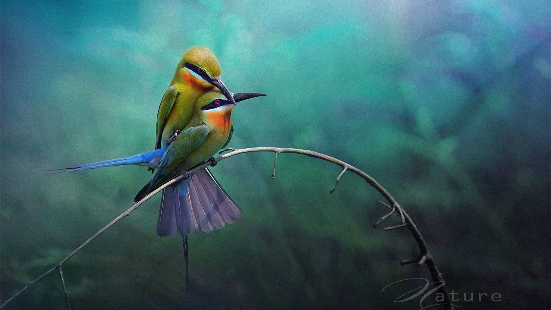 Lovebirds Wallpapers (52+ background pictures)