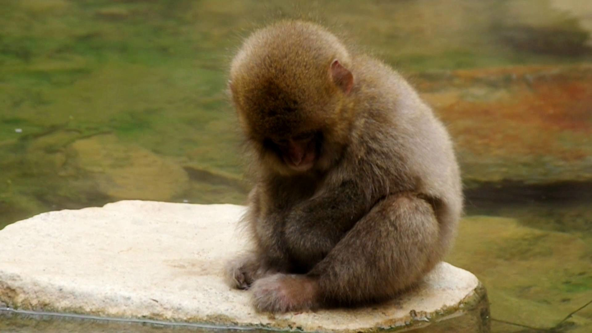 1920x1080 Monkey See No Evil Speak Hear Wallpapers For Cute