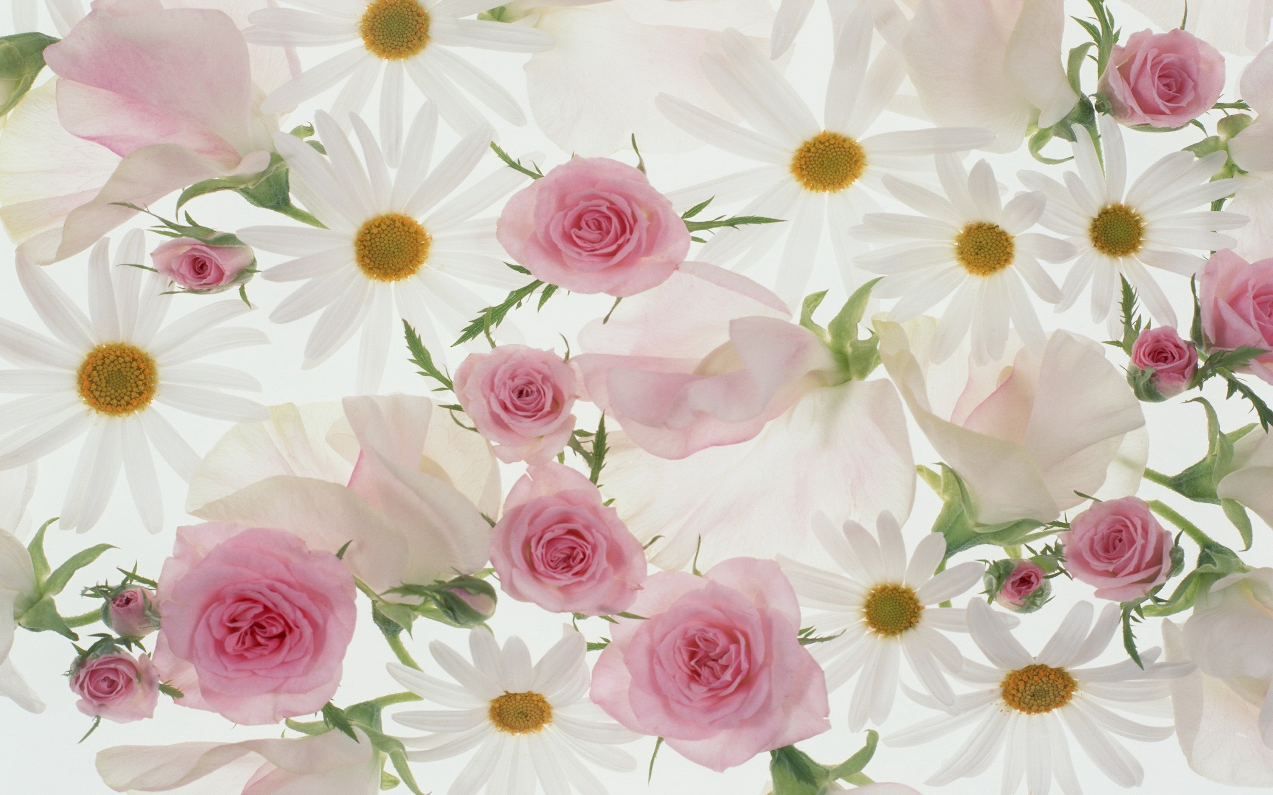 Pictures Of Beautiful Flowers Wallpapers 61 Background Pictures