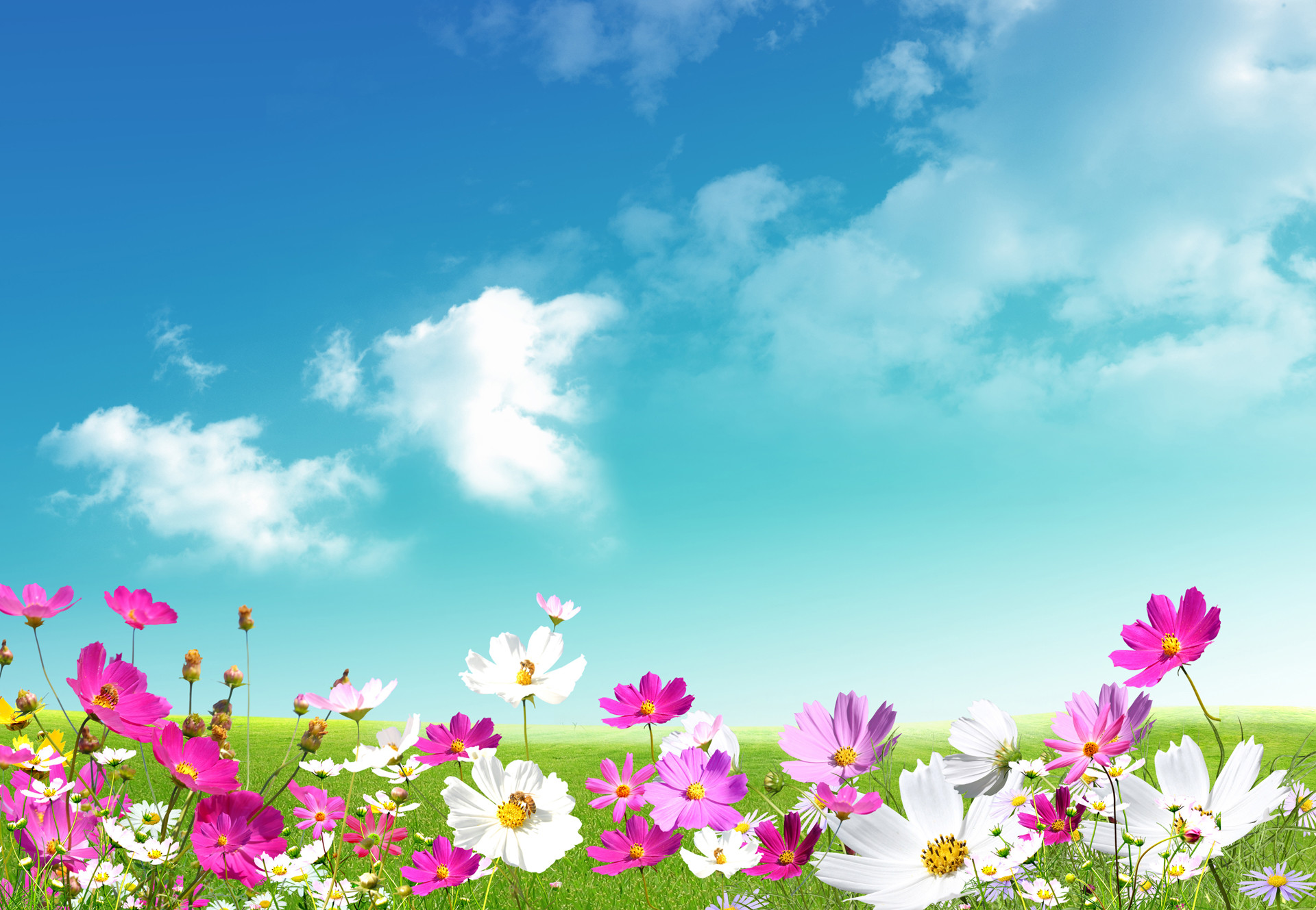 Spring Wallpapers Computer 68 Background Pictures