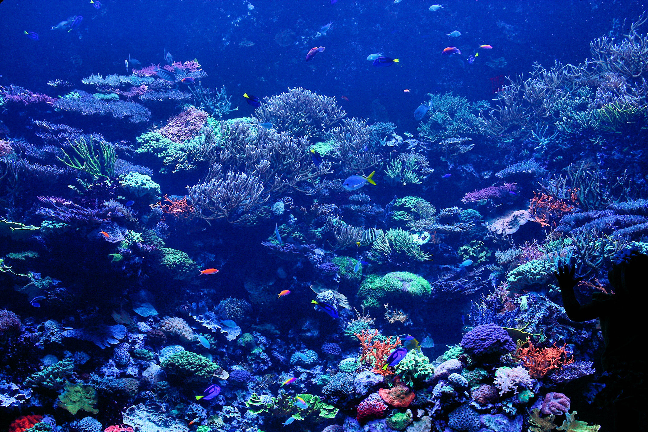 Reef Wallpapers 61 Background Pictures