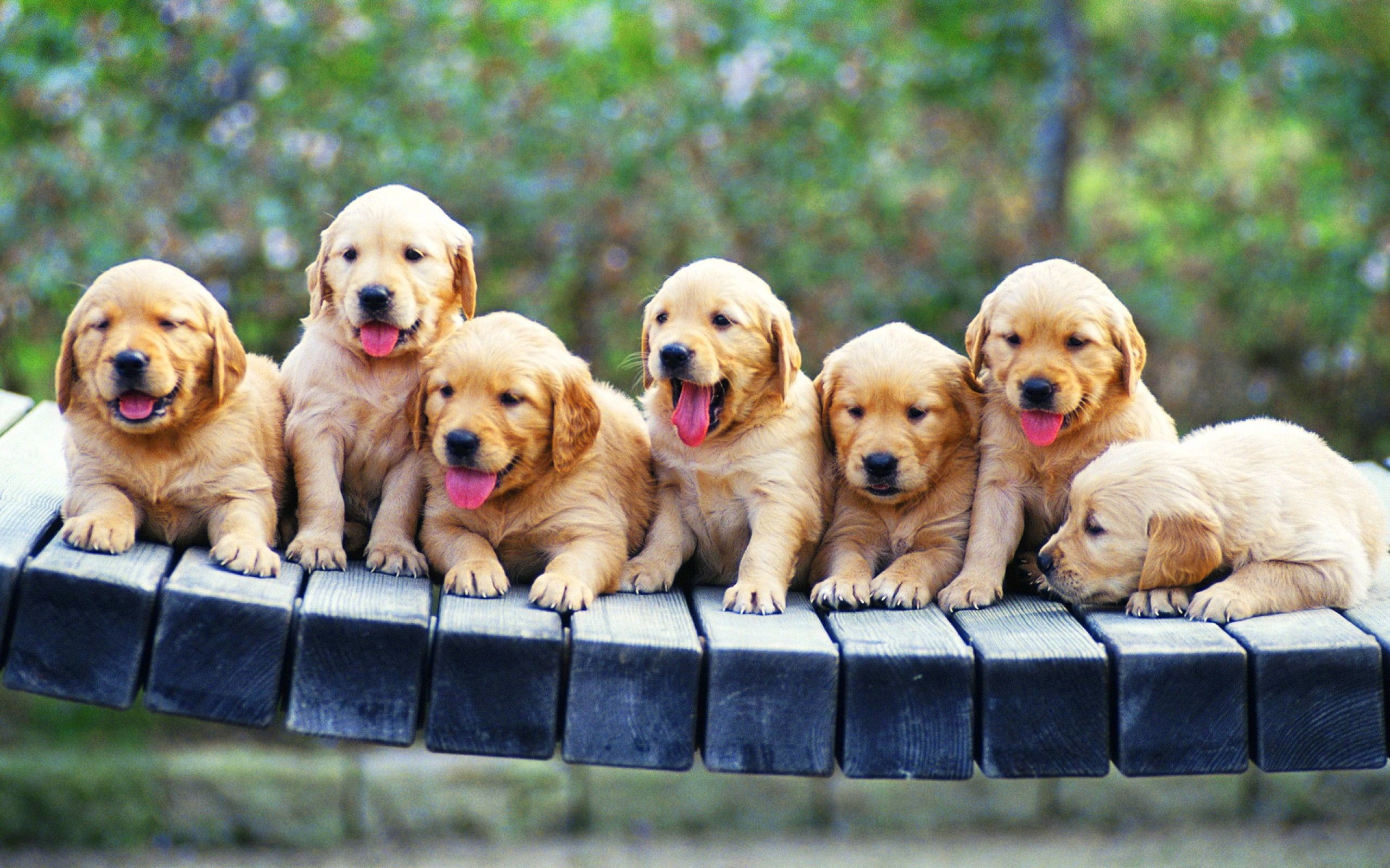 1920x1080 Wallpaper For IPhone Dogs New Puppy Best Cute Puppies Hd Wallpapers