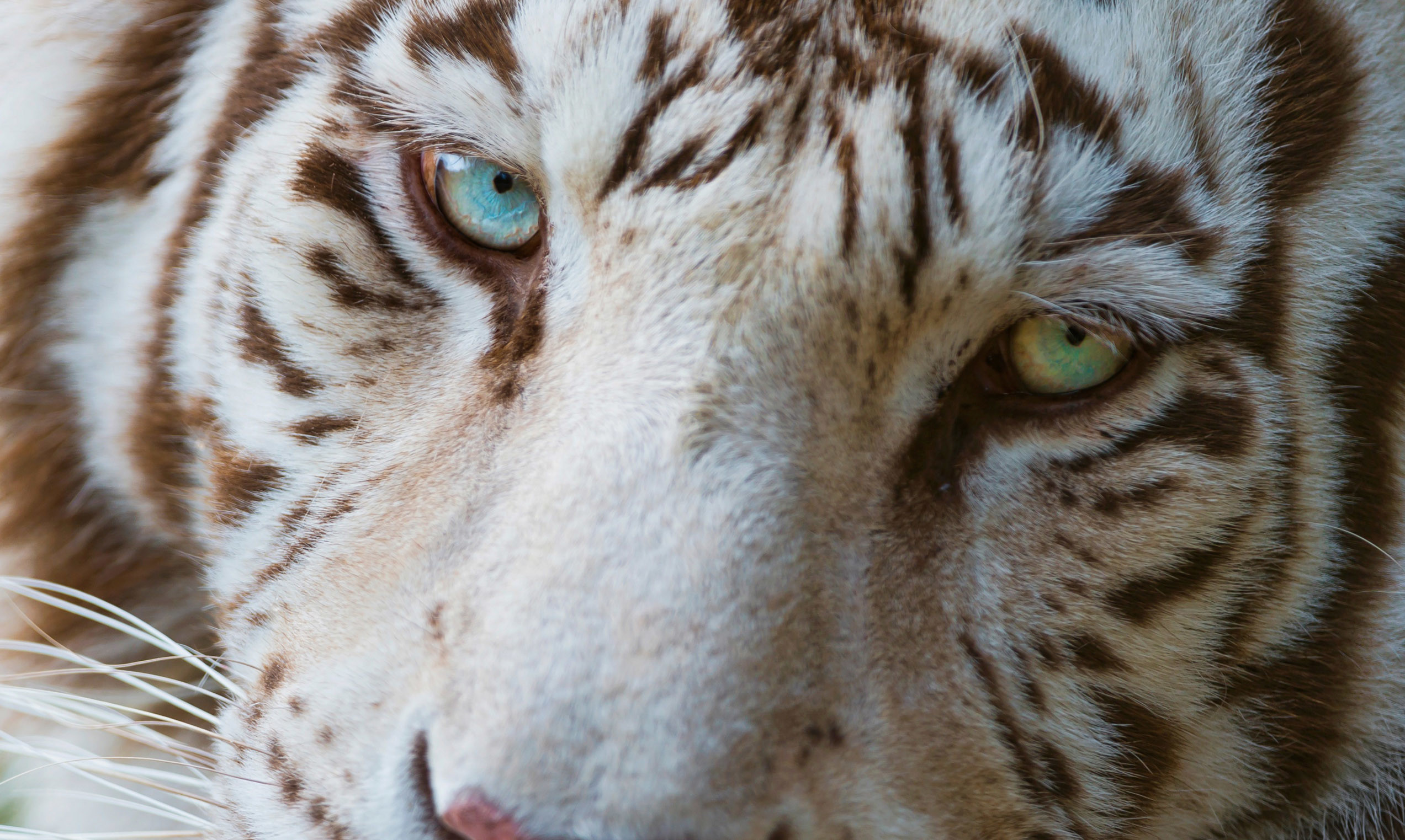 2560x1600 Related Cool Animal Wallpaper Download Animated Wolf Pics