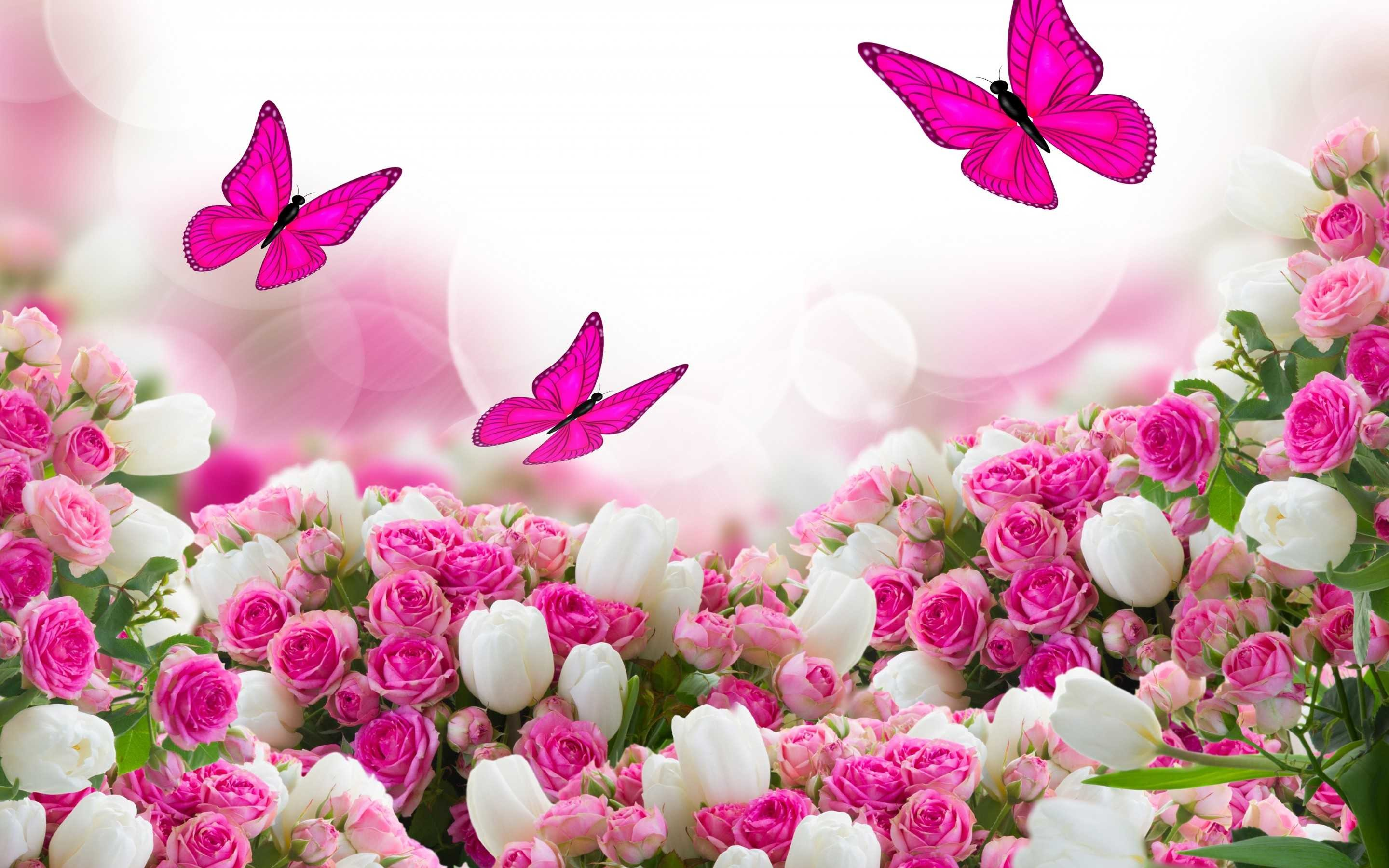 1920x1280 Beautiful Pink Roses For Desktop Wallpapers Background