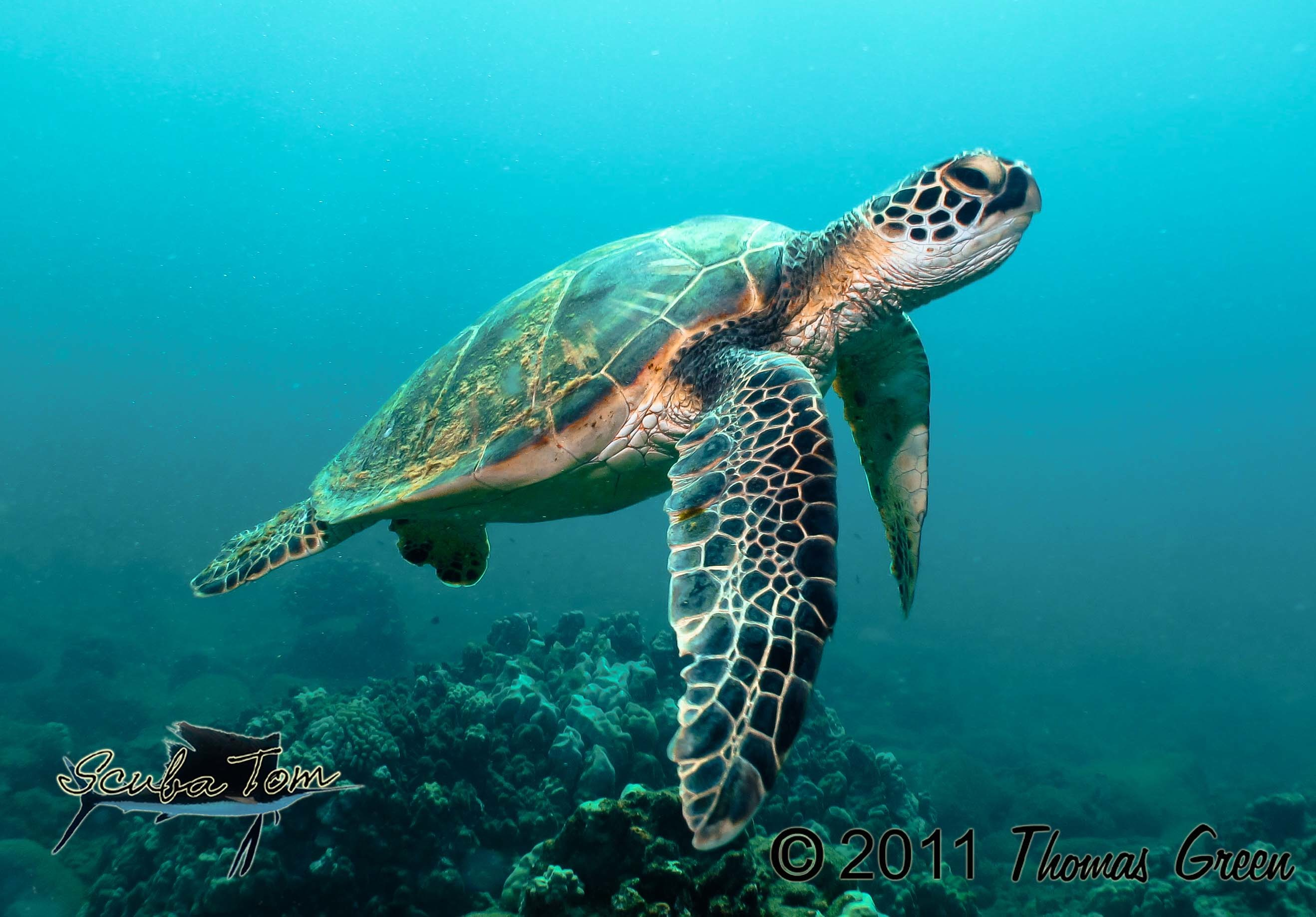Sea Turtles Wallpapers (68+ background pictures)