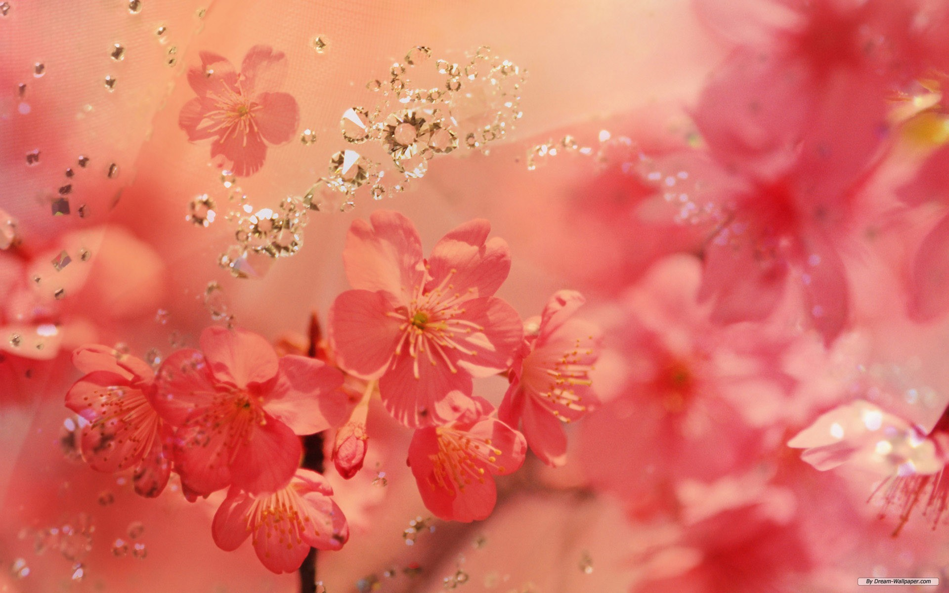 Spring Flowers Wallpapers 82 Background Pictures