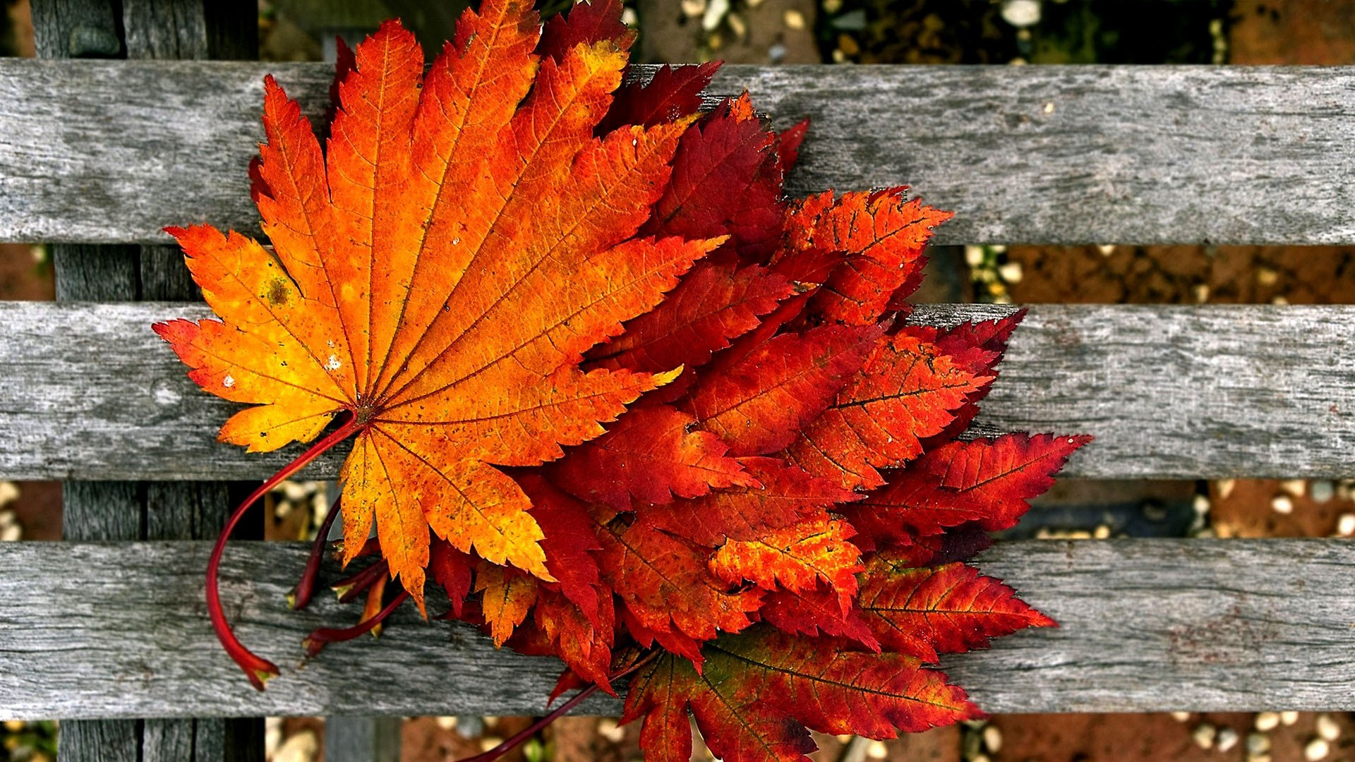 2560x1600 Fall Leaves HD Widescreen Wallpapers