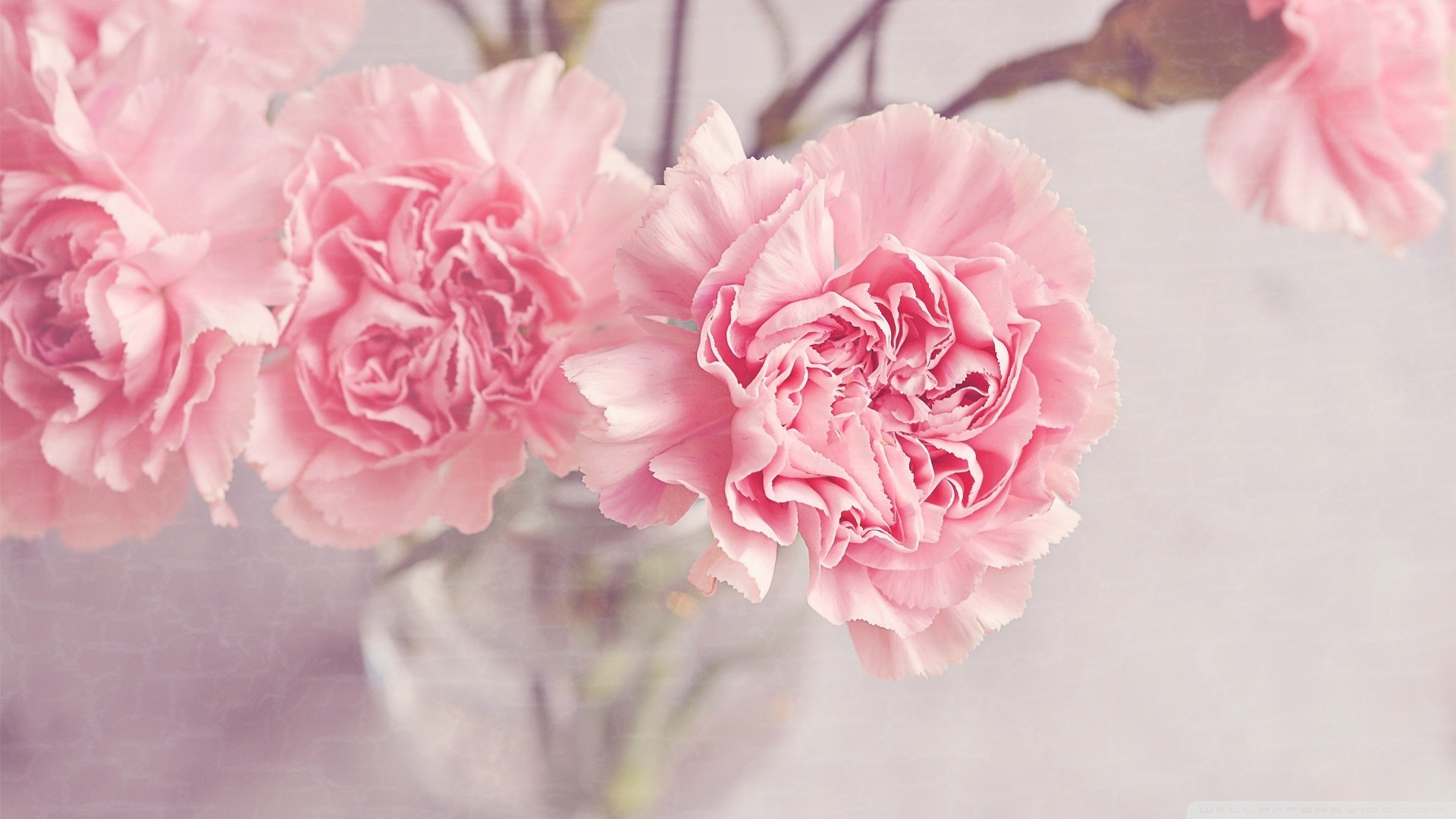 Light Pink Wallpapers 70 Background Pictures