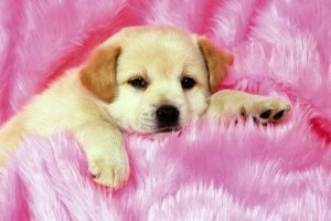 cute puppy pictures wallpapers 1920x1440 for lockscreen
