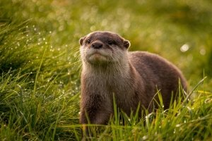 popular otter wallpapers 2039x1287 download