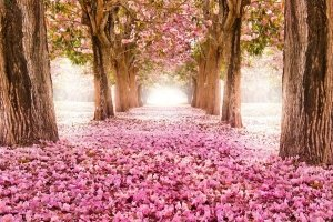 most popular pink nature wallpapers 1920x1240 for android